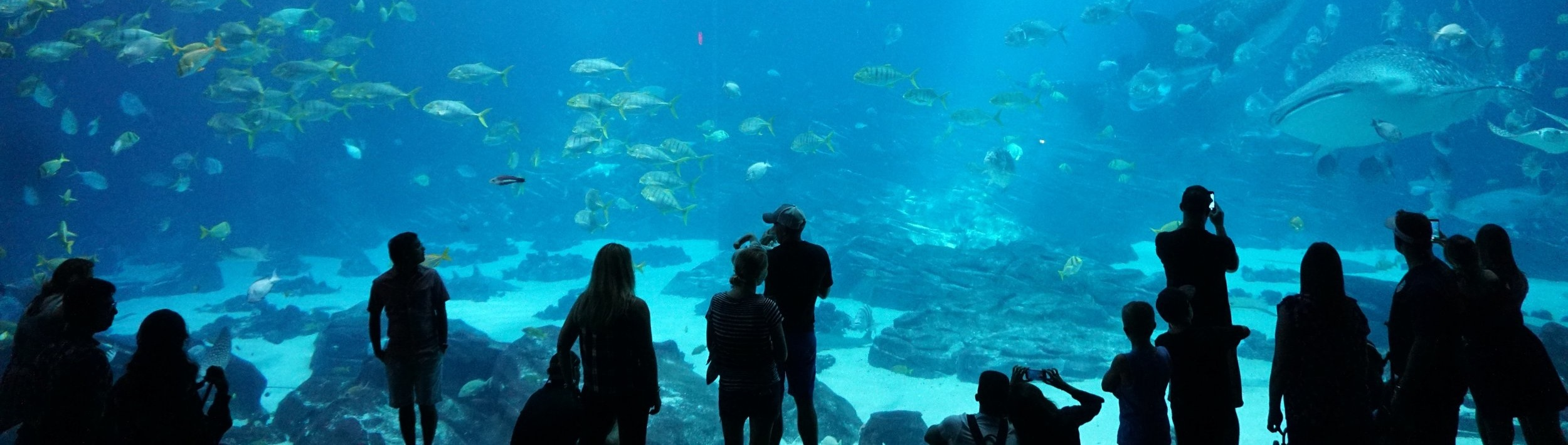 Groups of people looking up close at a glass aquarium window filled with fish. Photo by  Glenn Haertlein  on  Unsplash