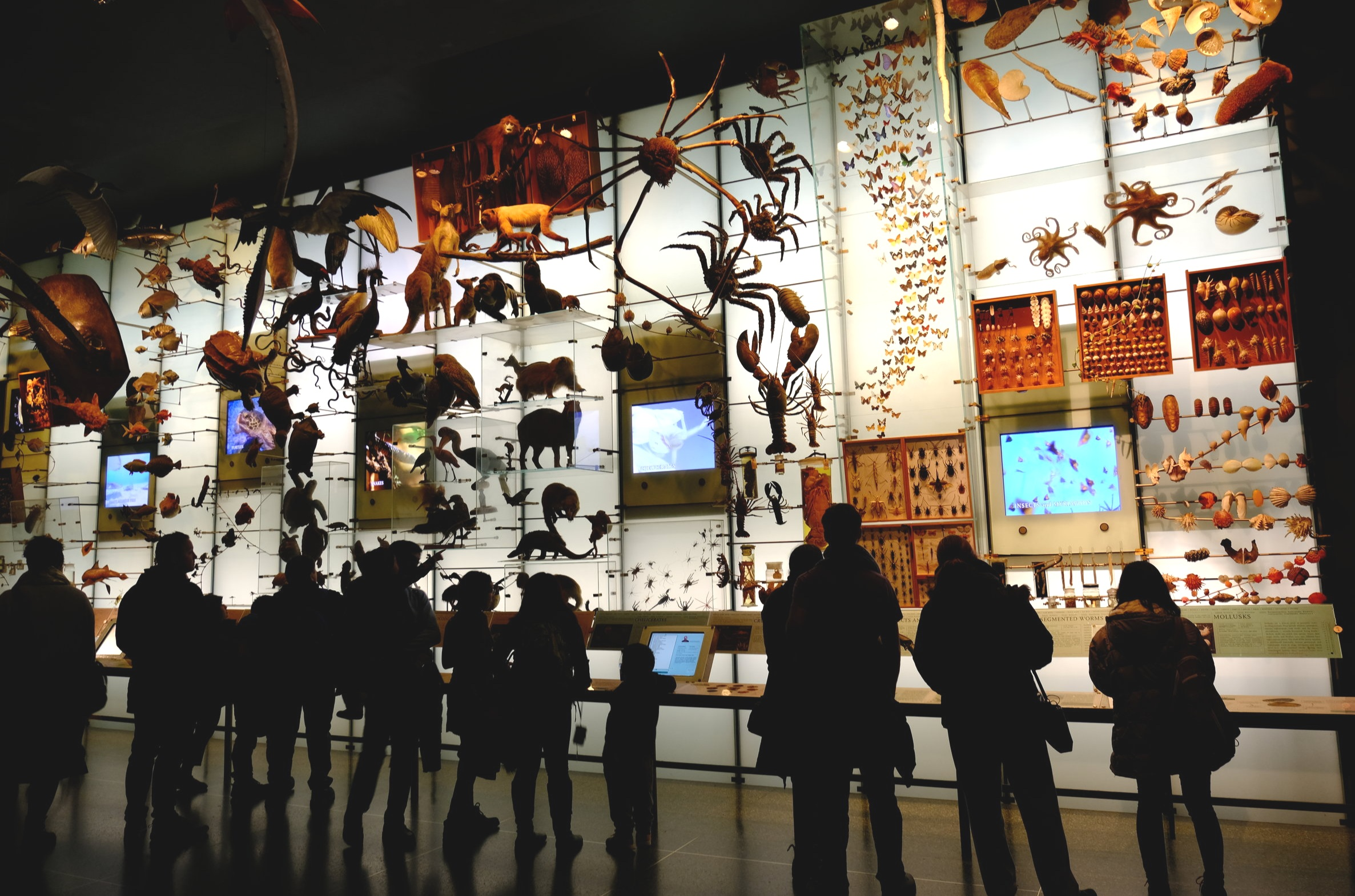 Visitors in the American Museum of Natural History looking at a wall of videos, spiders, and other artifacts. Photo:   tosh chiang