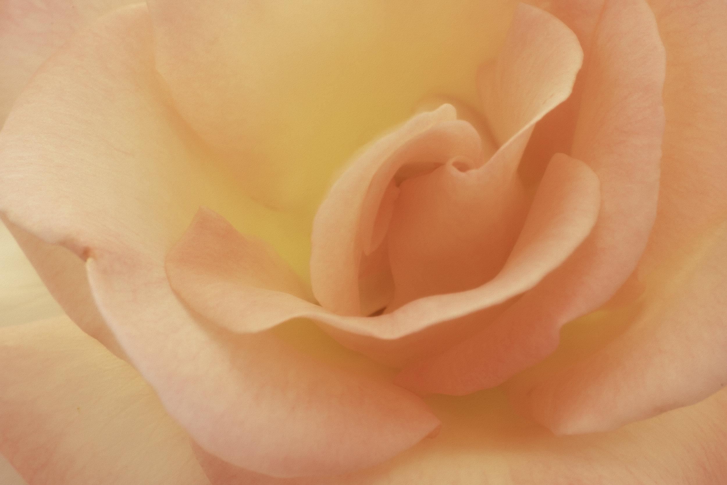 Maggie Yates Flowers-30.jpg