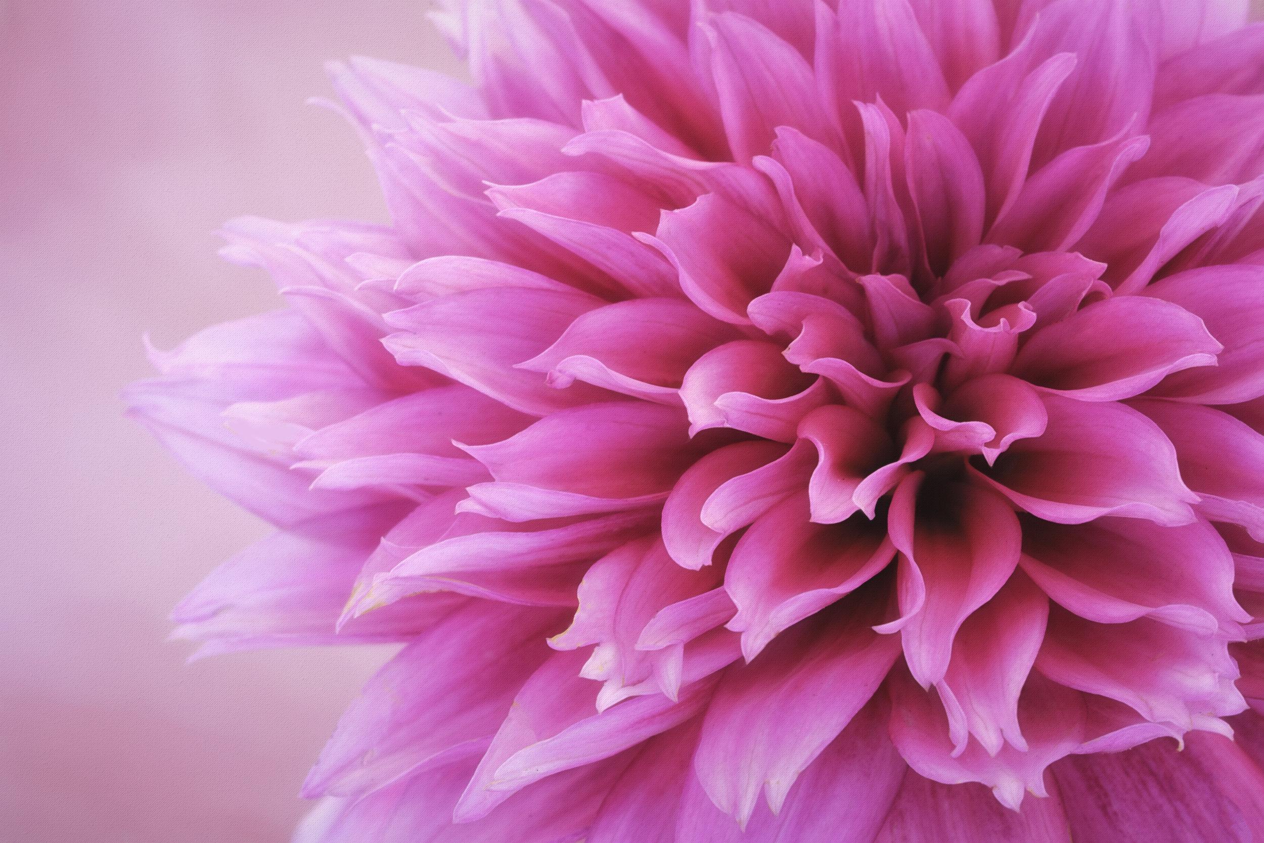 Maggie Yates Flowers-19.jpg