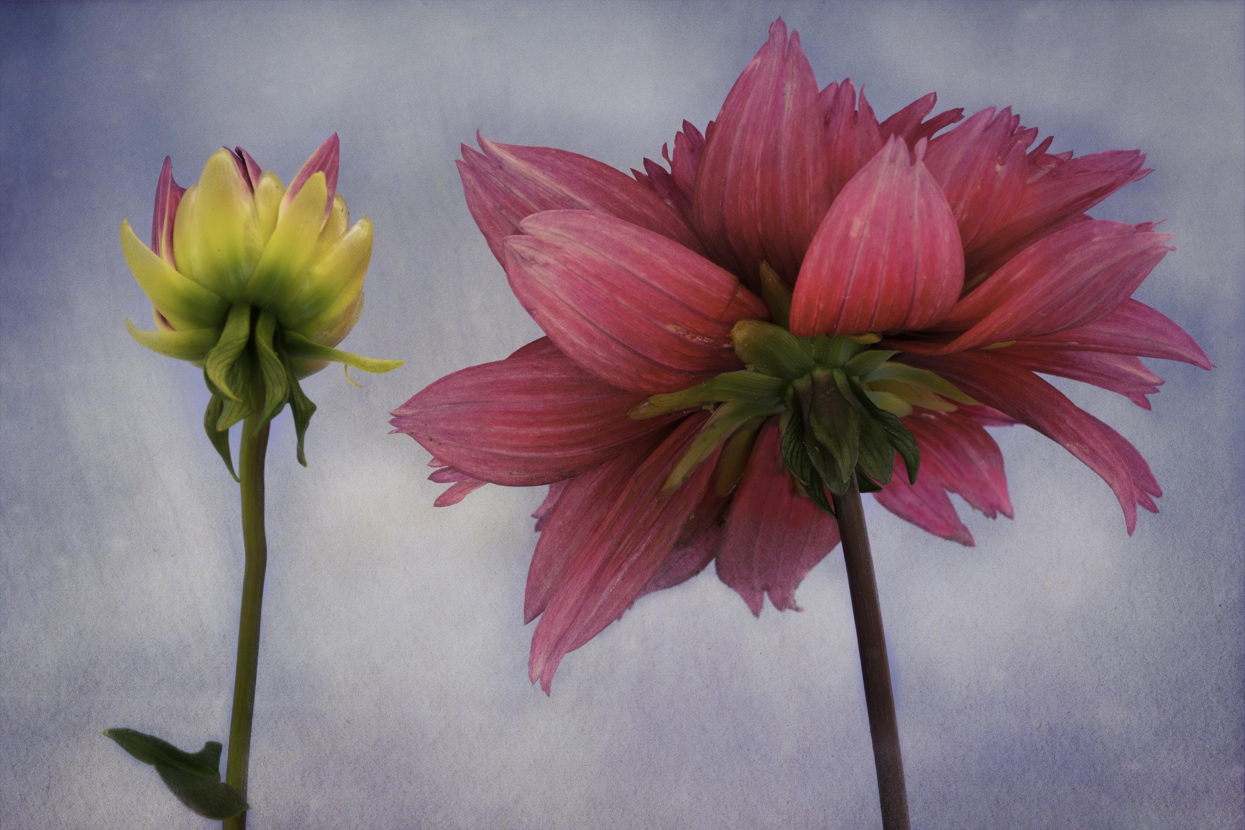 Maggie Yates Flowers-24.jpg