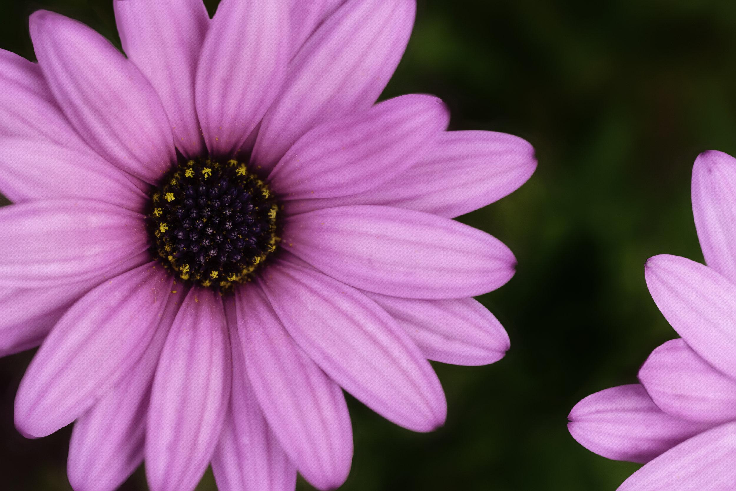 Maggie Yates Flowers-3.jpg