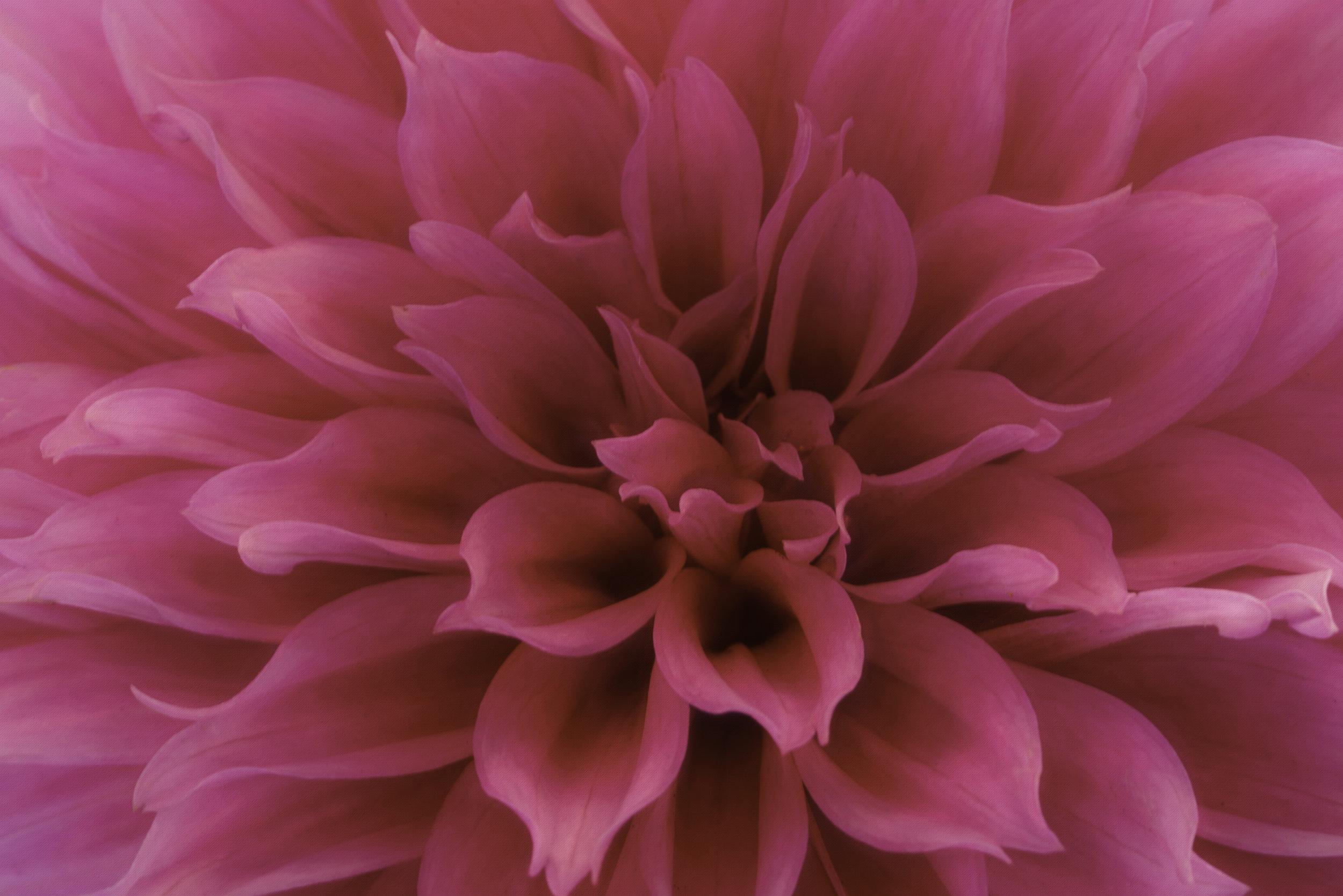 Maggie Yates Flowers-4.jpg