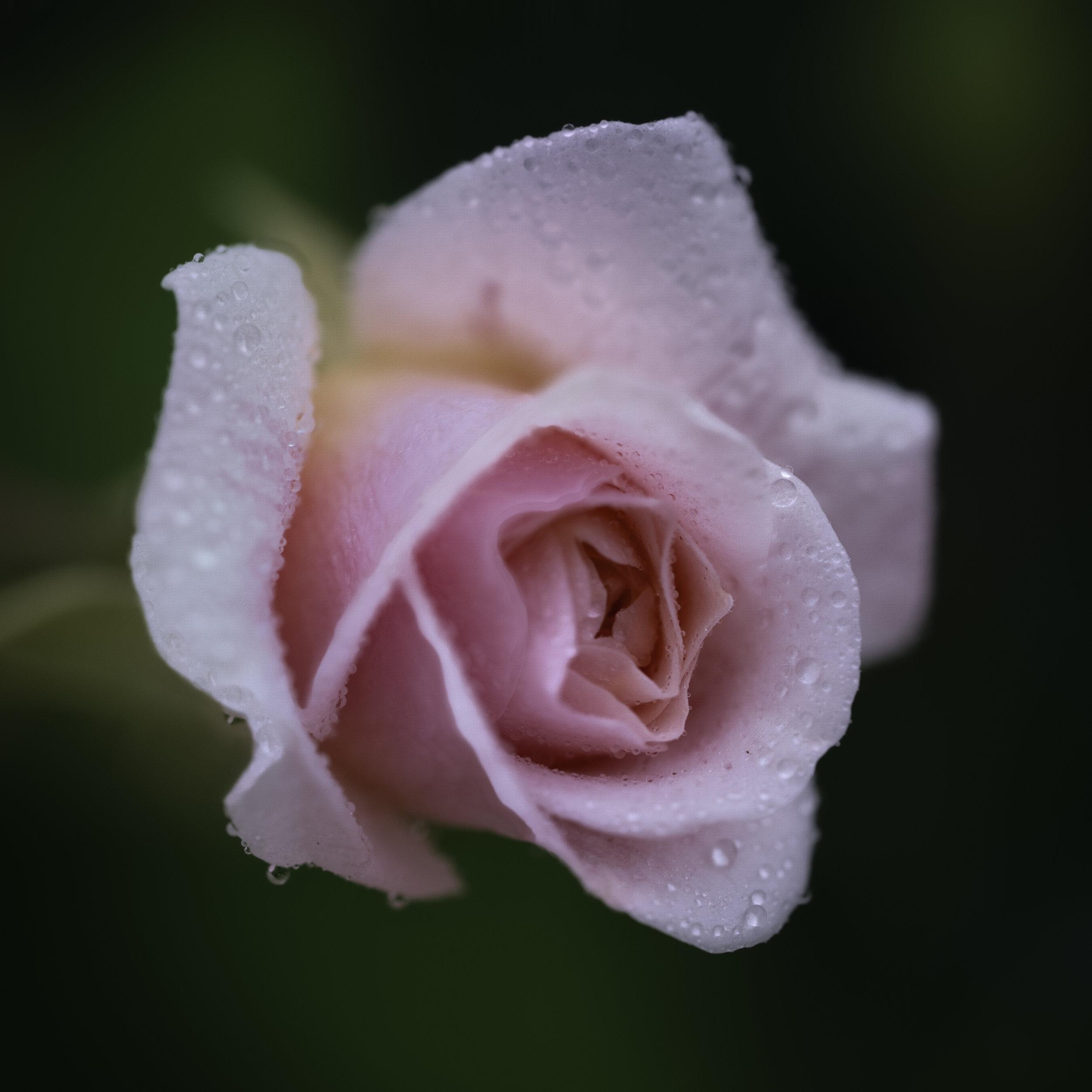 Maggie Yates Flowers-6.jpg