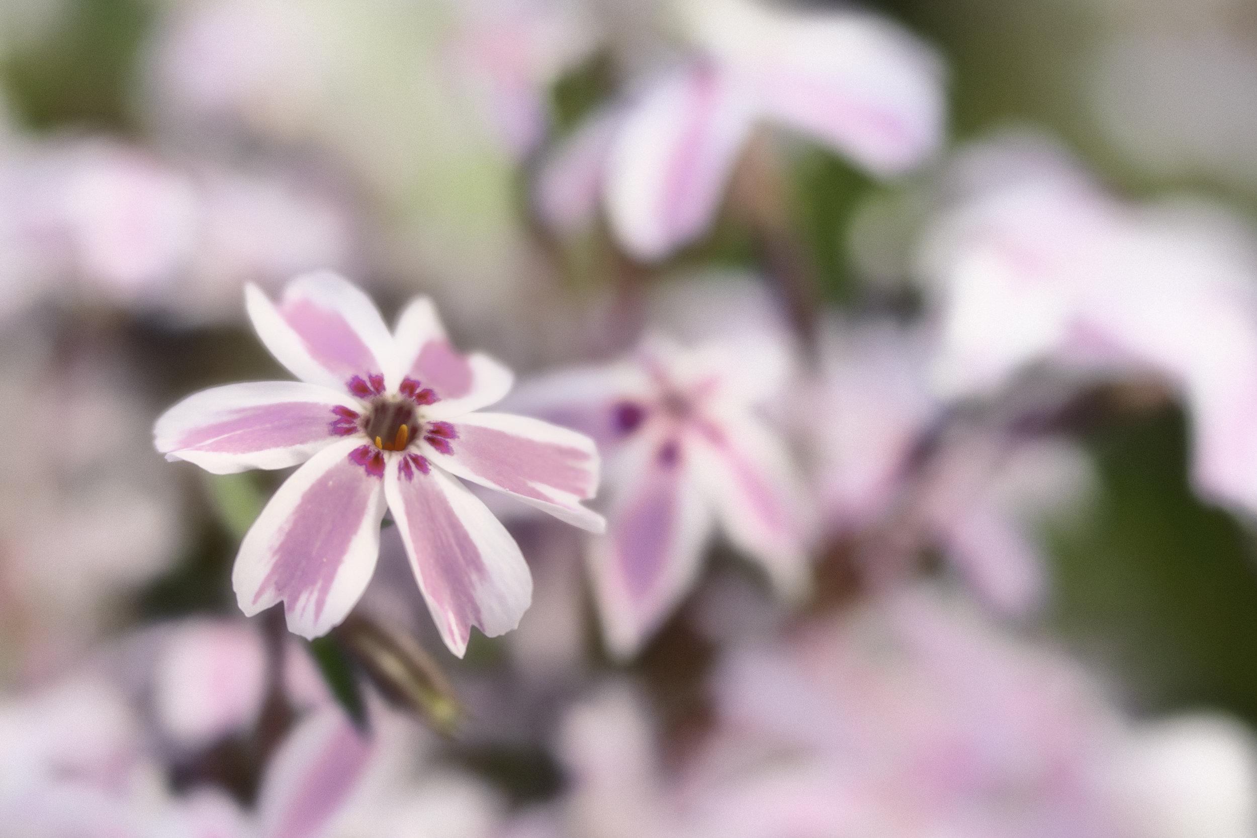 Maggie Yates Flowers-8.jpg