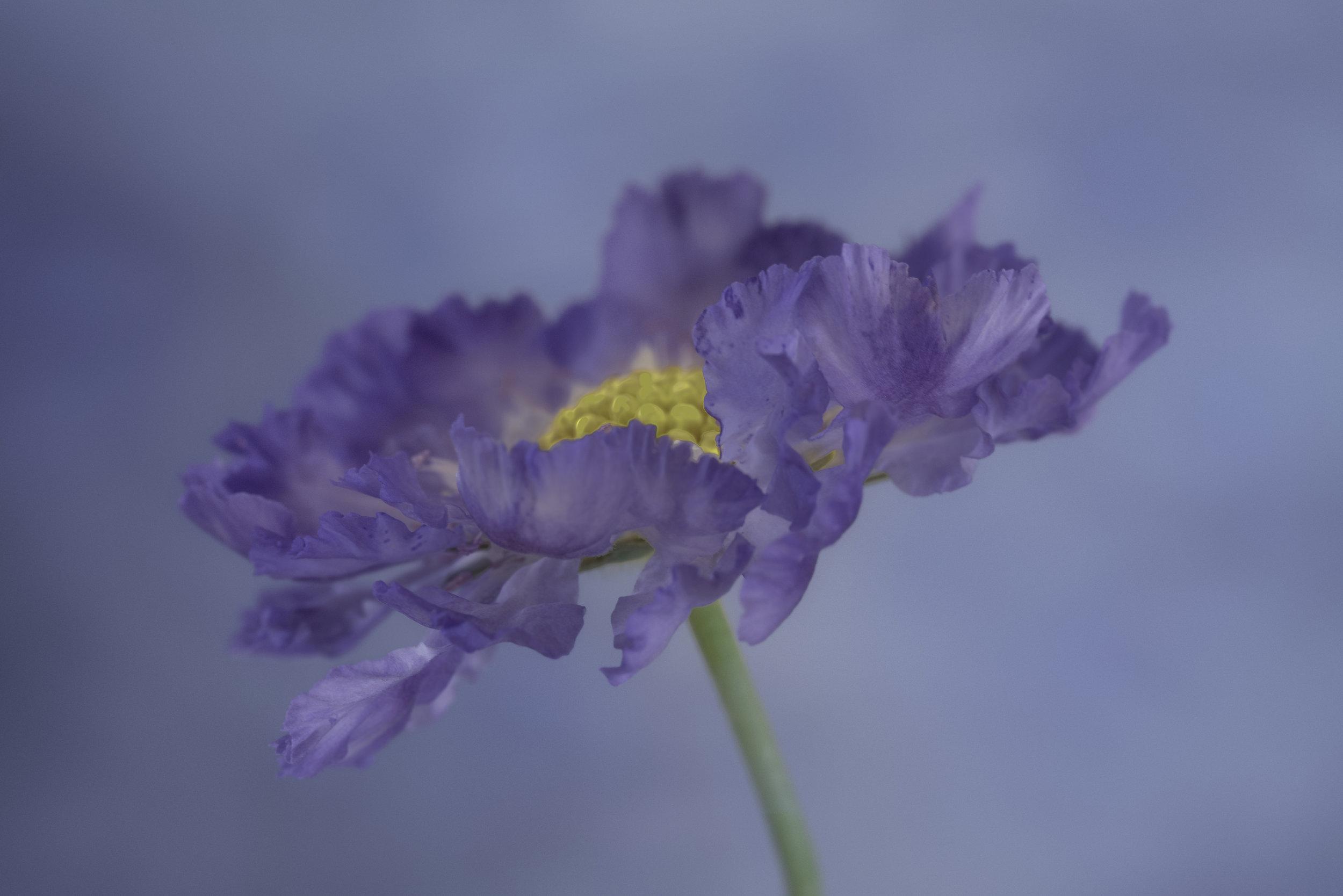 Maggie Yates Flowers-45R.jpg