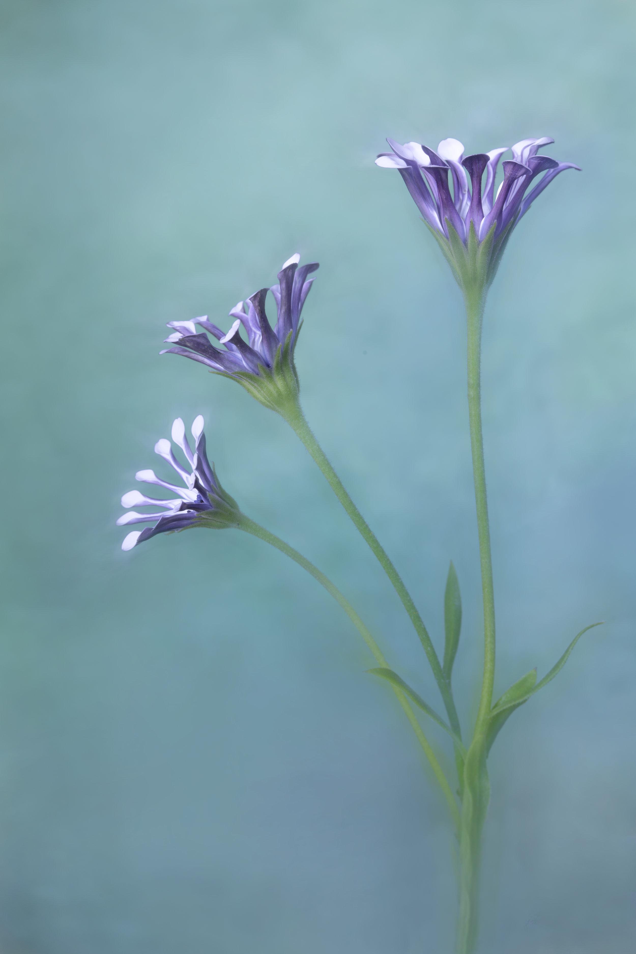 Maggie Yates Flowers-43.jpg