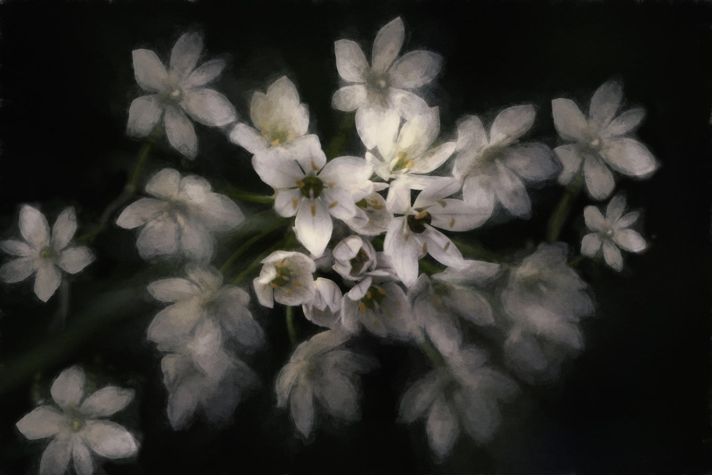 Maggie Yates Flowers-5.jpg