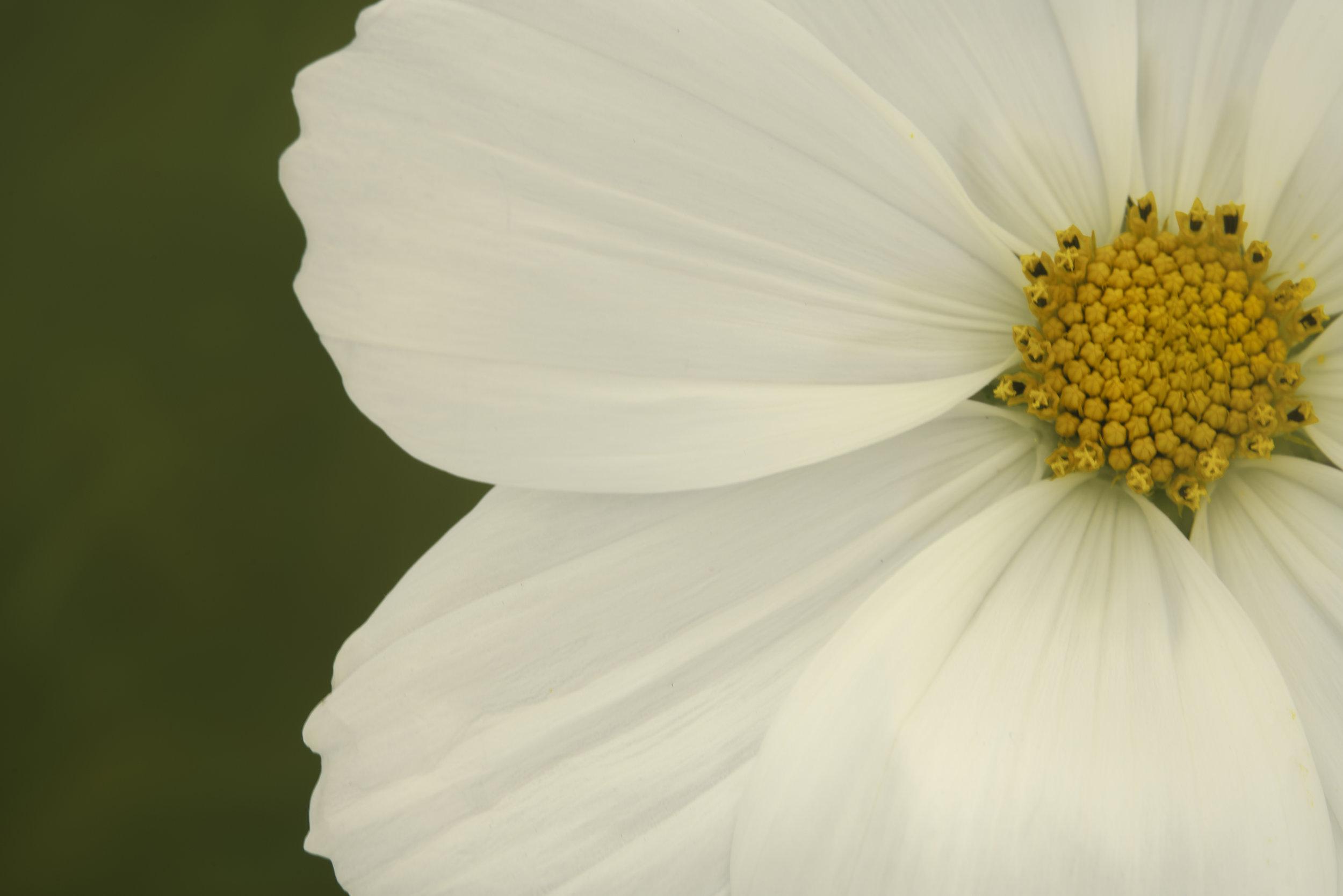 Maggie Yates Flowers-34.jpg