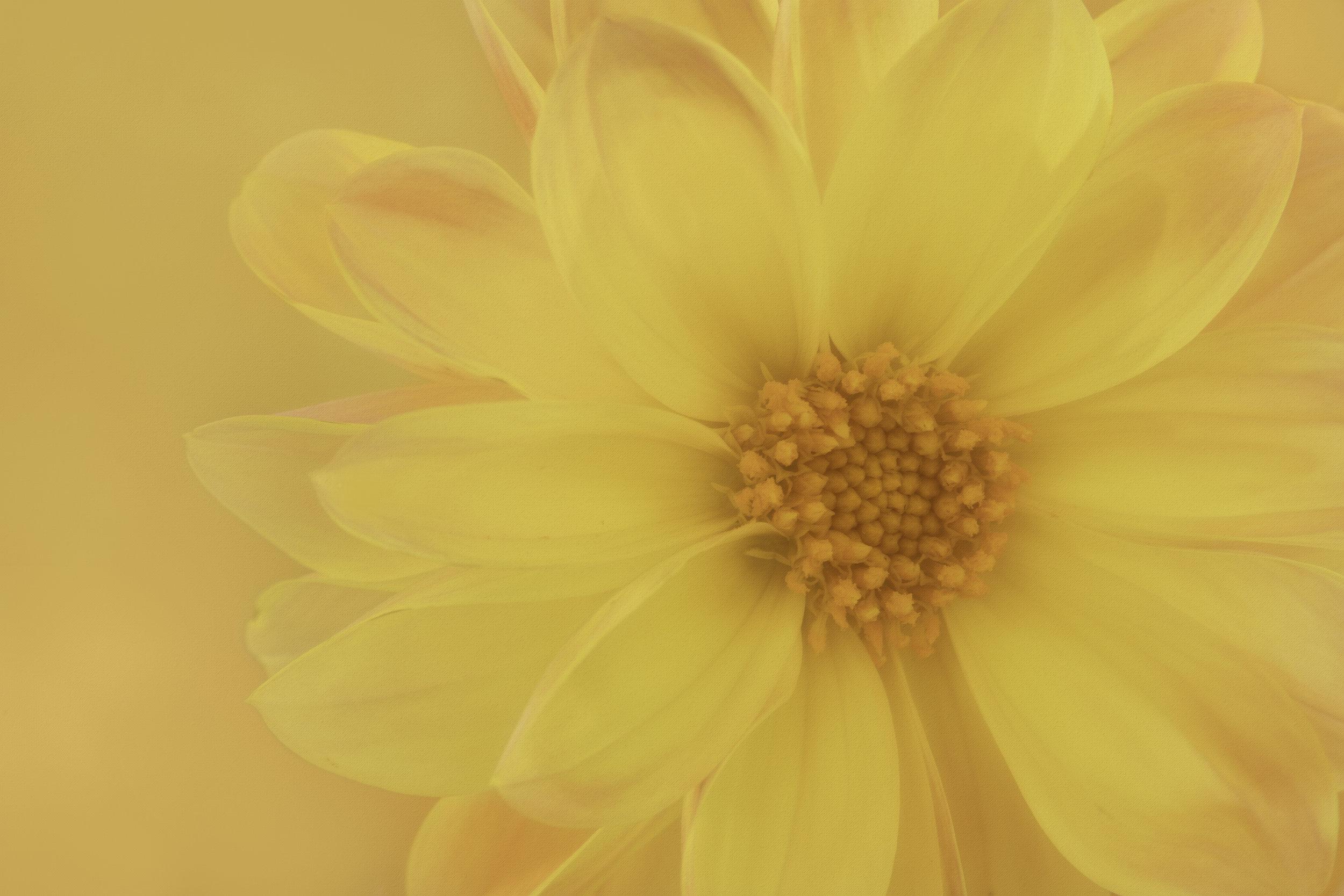 Maggie Yates Flowers-59.jpg
