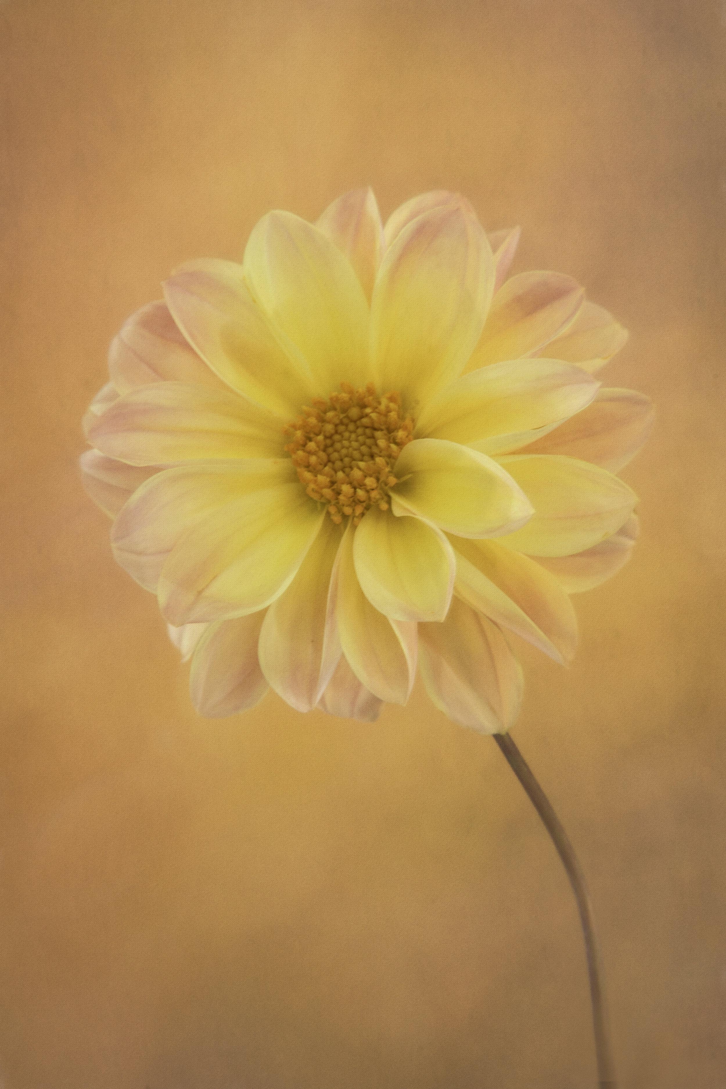 Maggie Yates Flowers-40.jpg