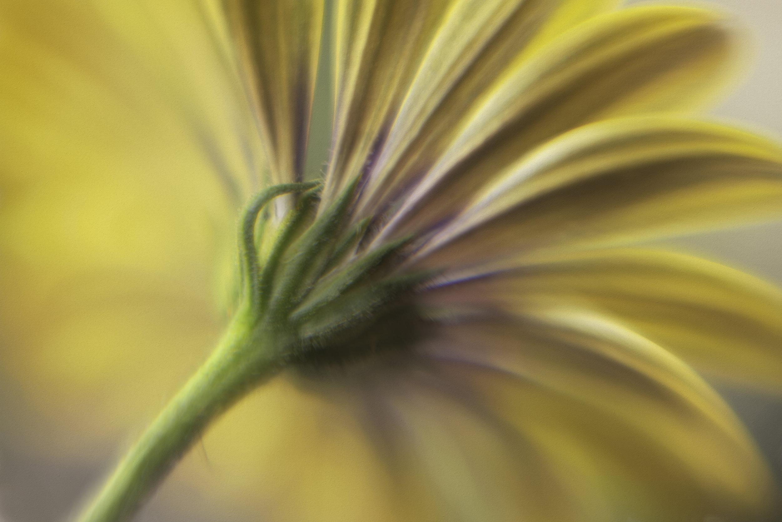 Maggie Yates Flowers-32.jpg