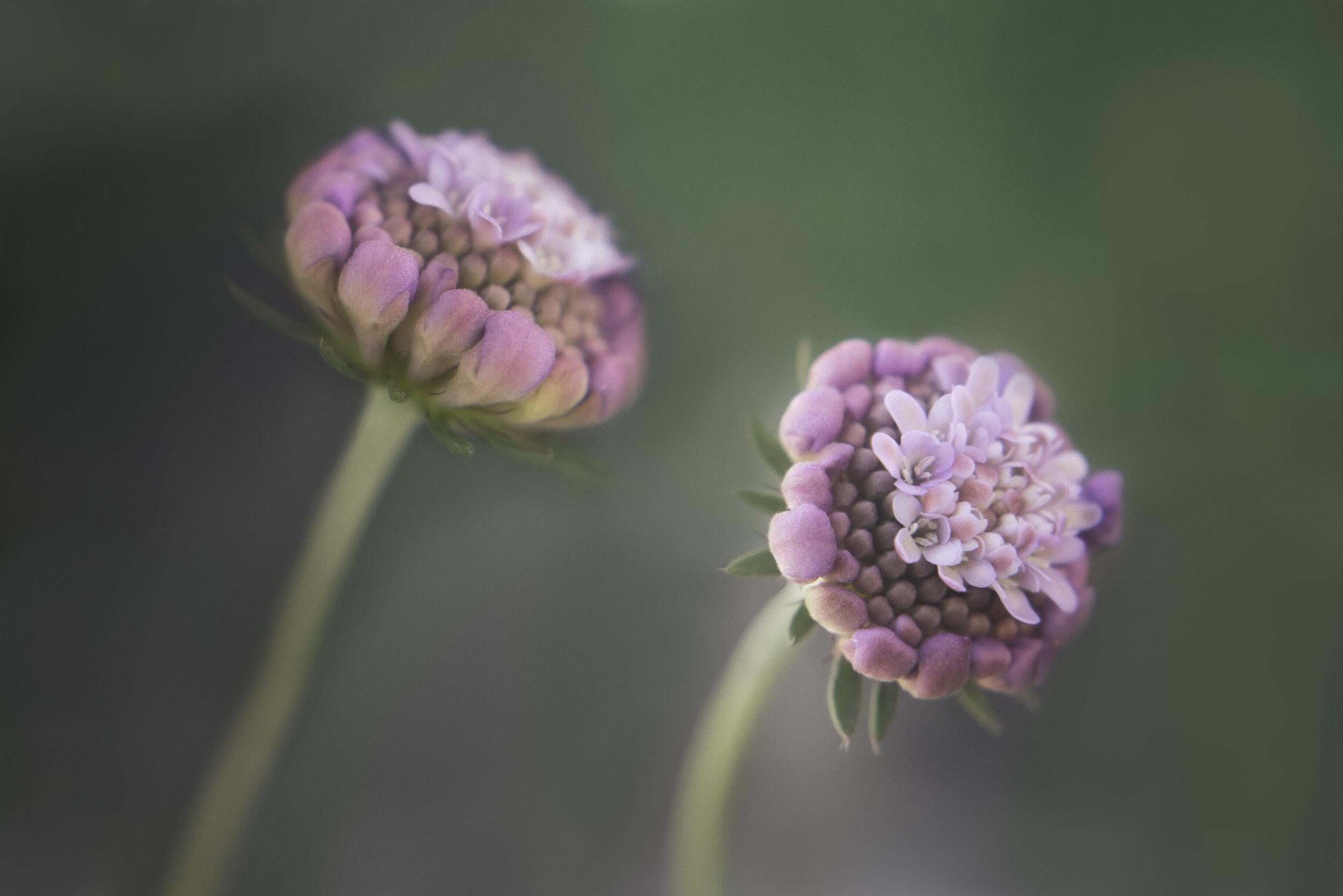 Maggie Yates Flowers-66.jpg