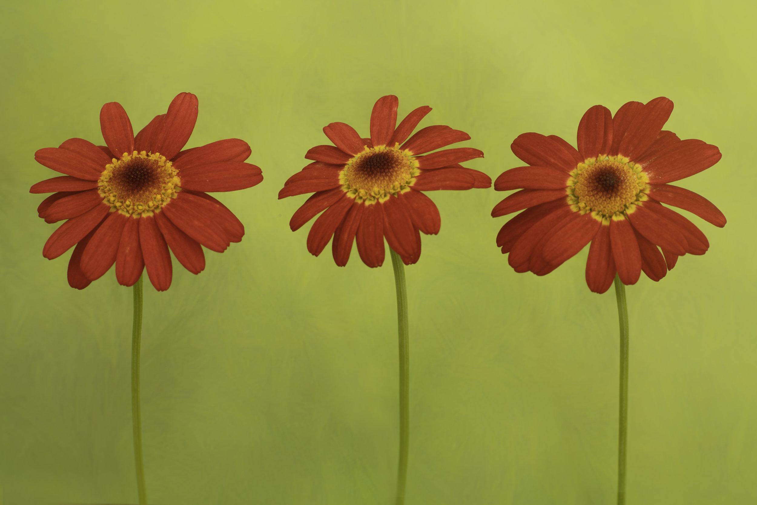 Maggie Yates Flowers-61.jpg