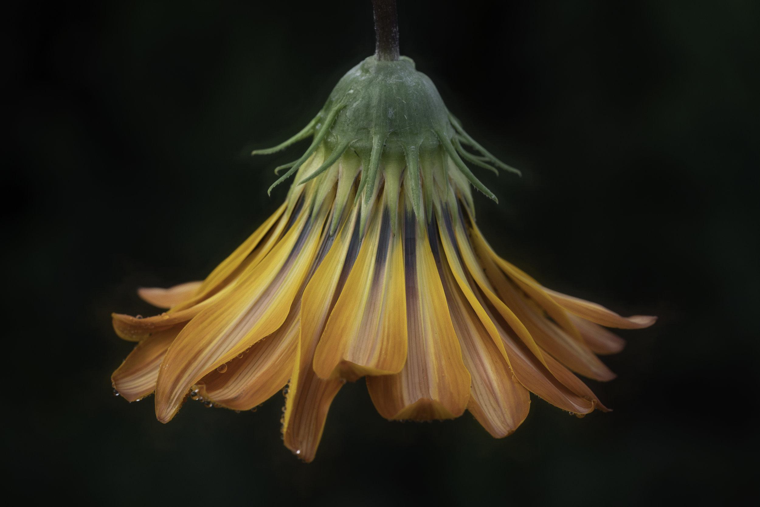 Maggie Yates Flowers-80.jpg