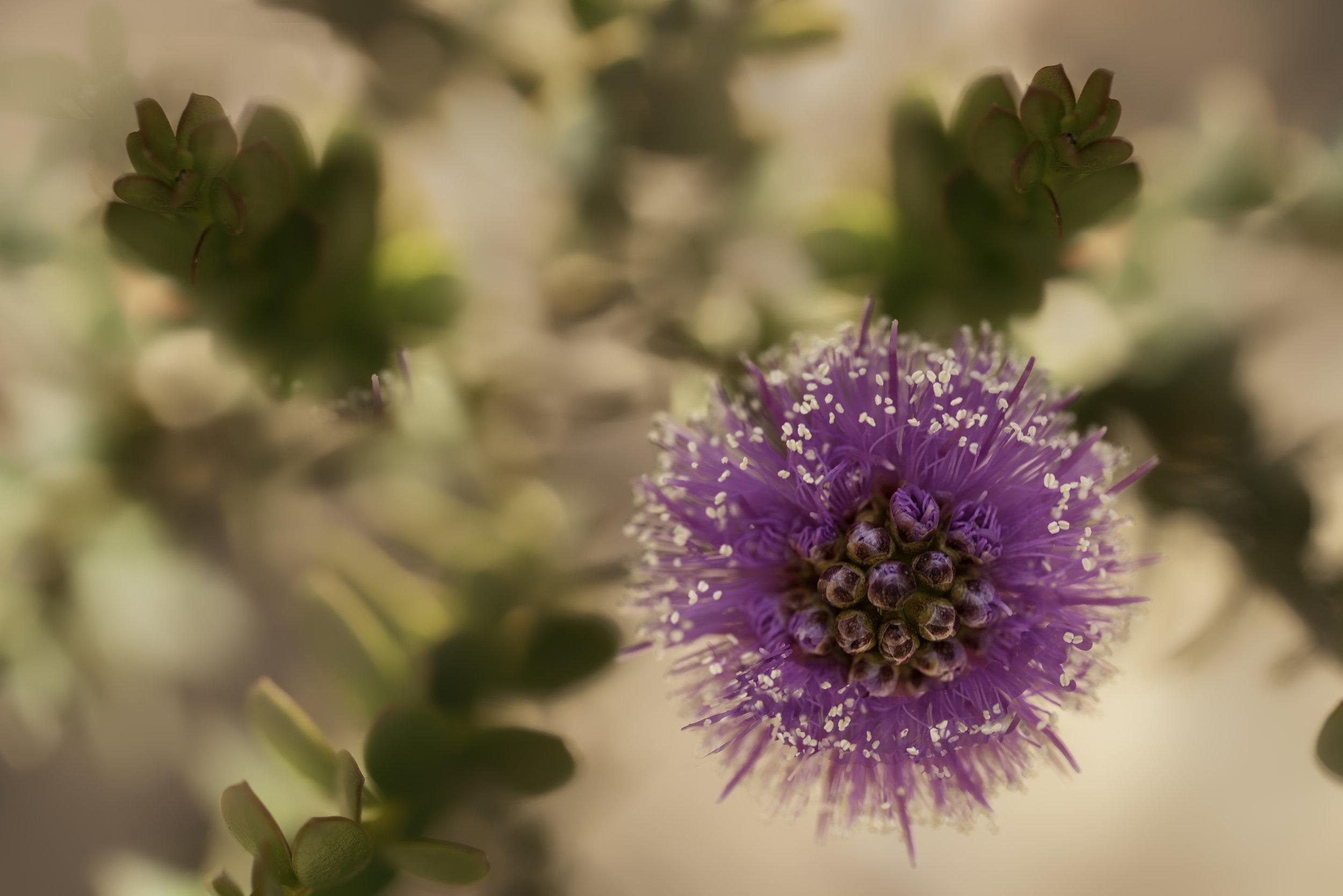 Maggie Yates Flowers-76.jpg