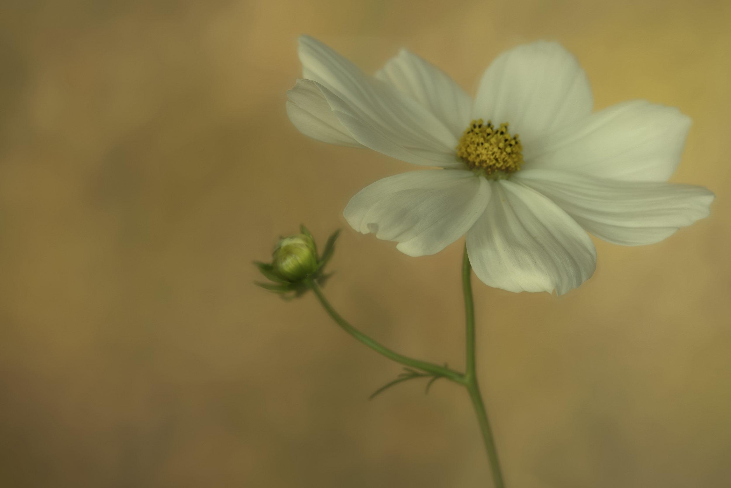 Maggie Yates Flowers-78.jpg