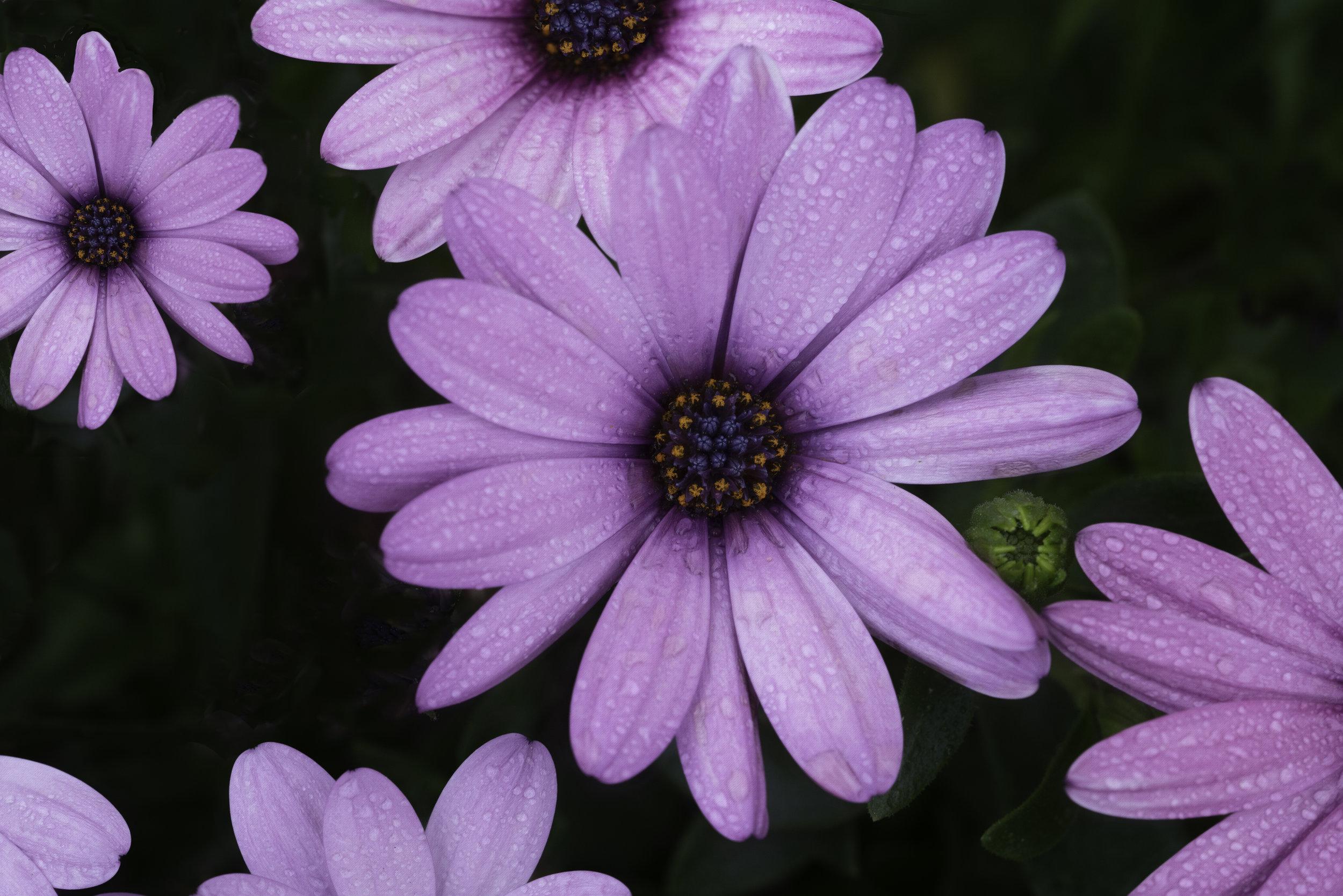 Maggie Yates Flowers-83.jpg