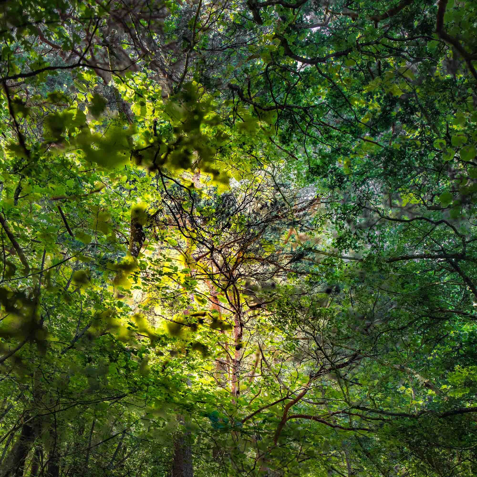 Leaf light_.jpg