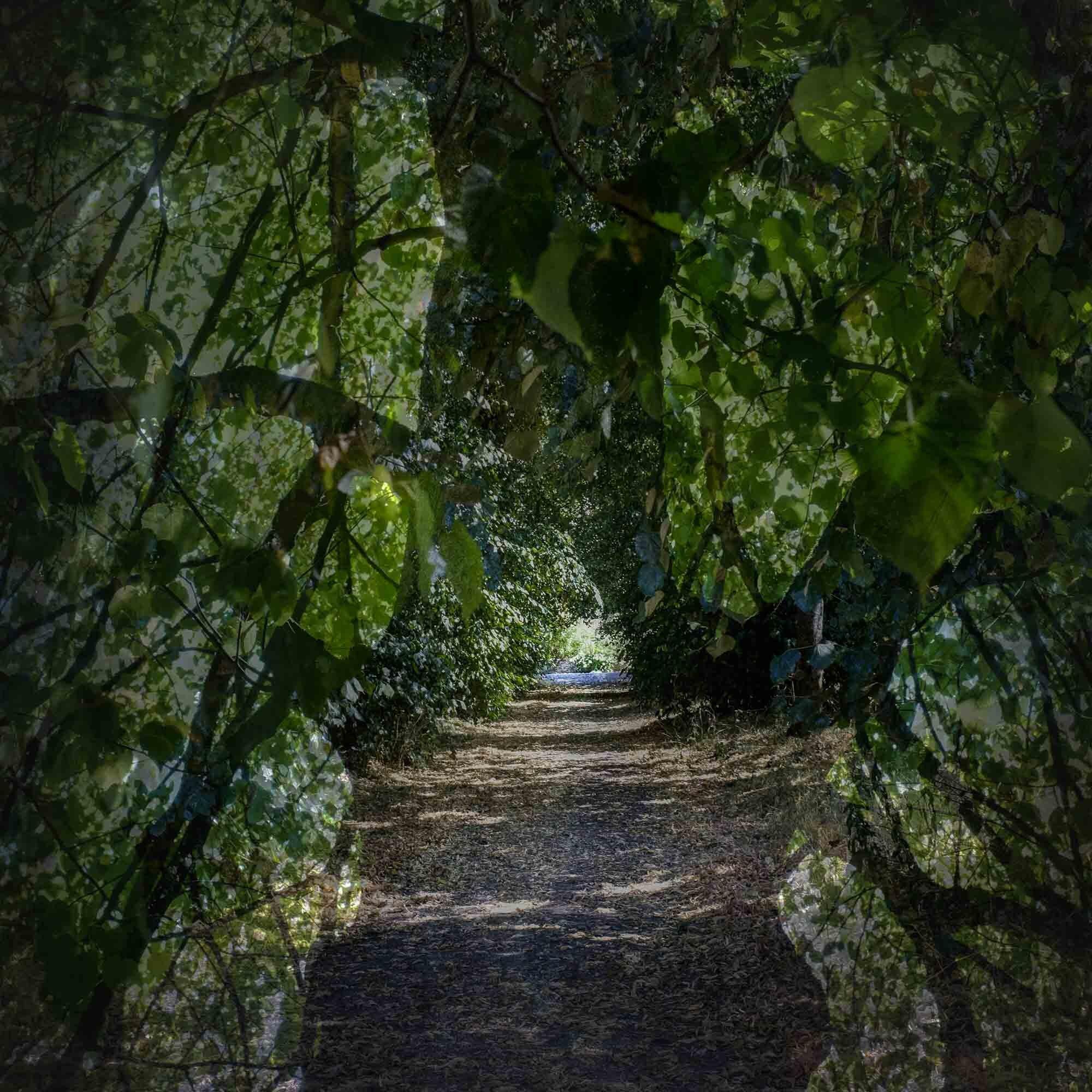 The path_.jpg