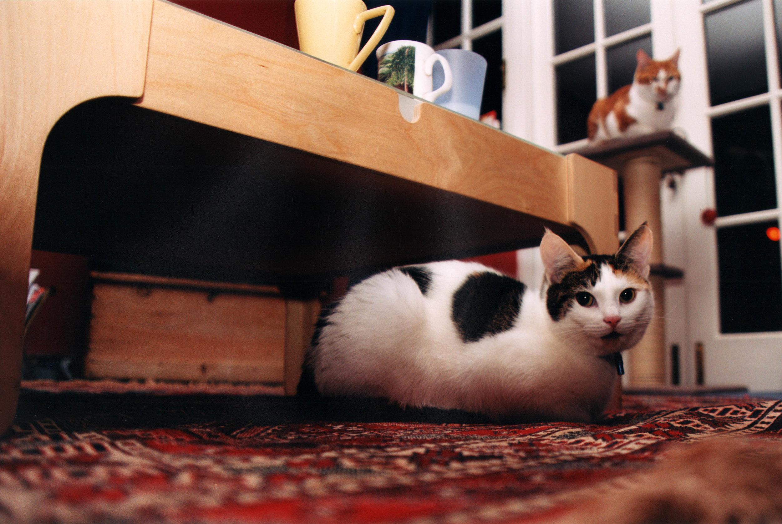 Cats 001_3000px-60.jpg