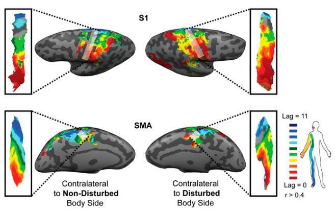 Saadon-Grosman et al. - PNAS - 2015