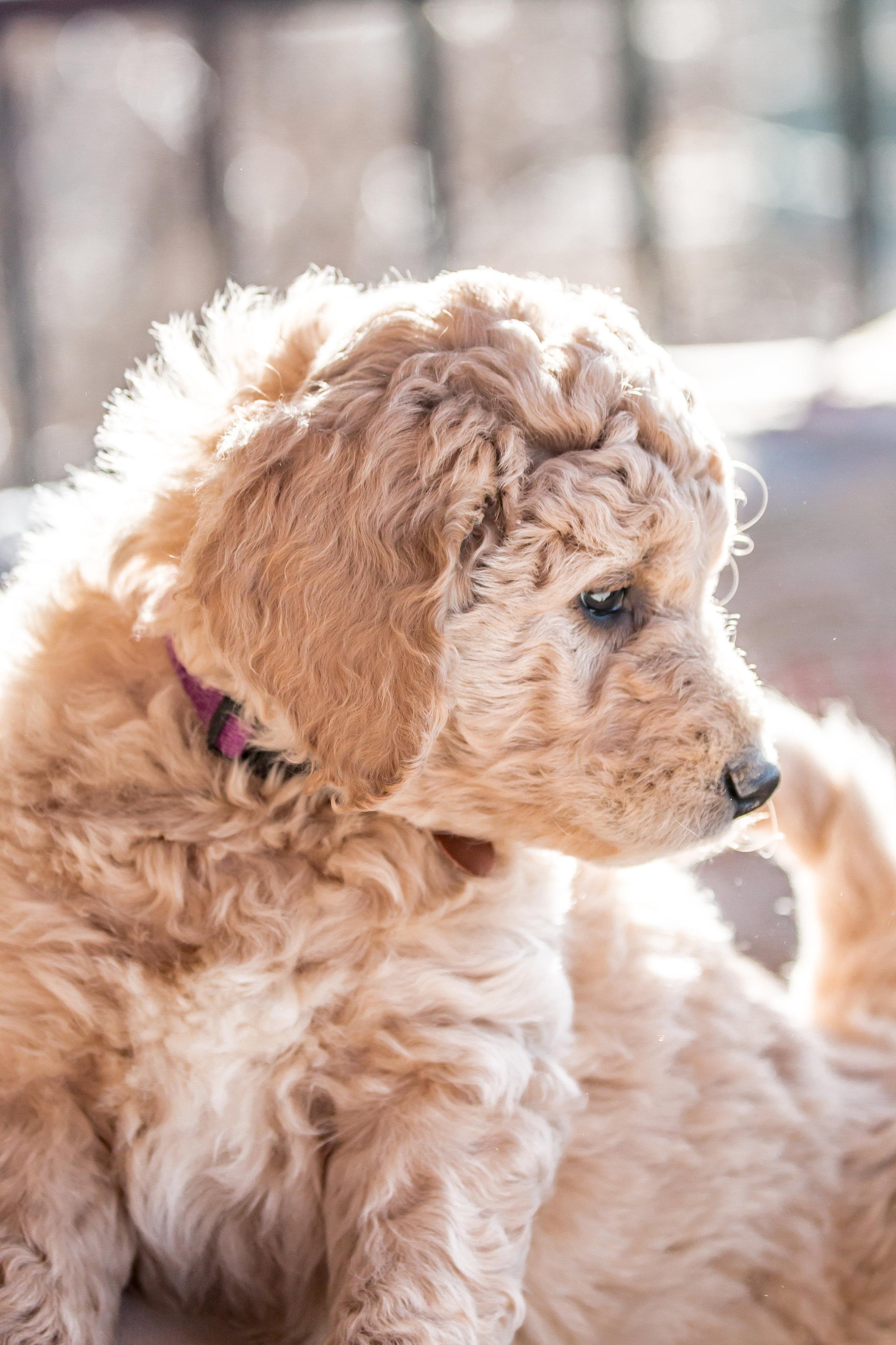 IMG_1136 Puppies.jpg