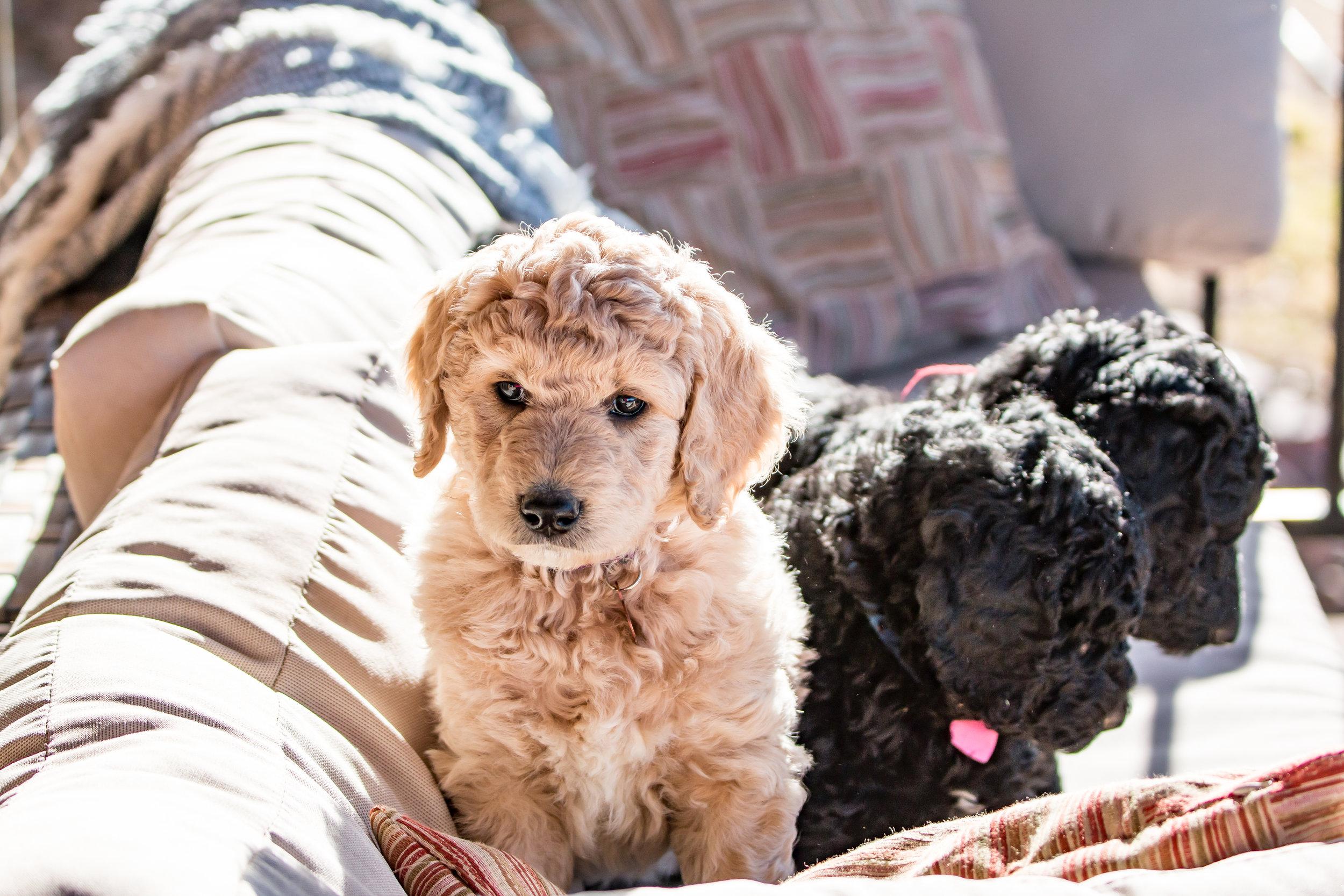 IMG_1123 Puppies.jpg