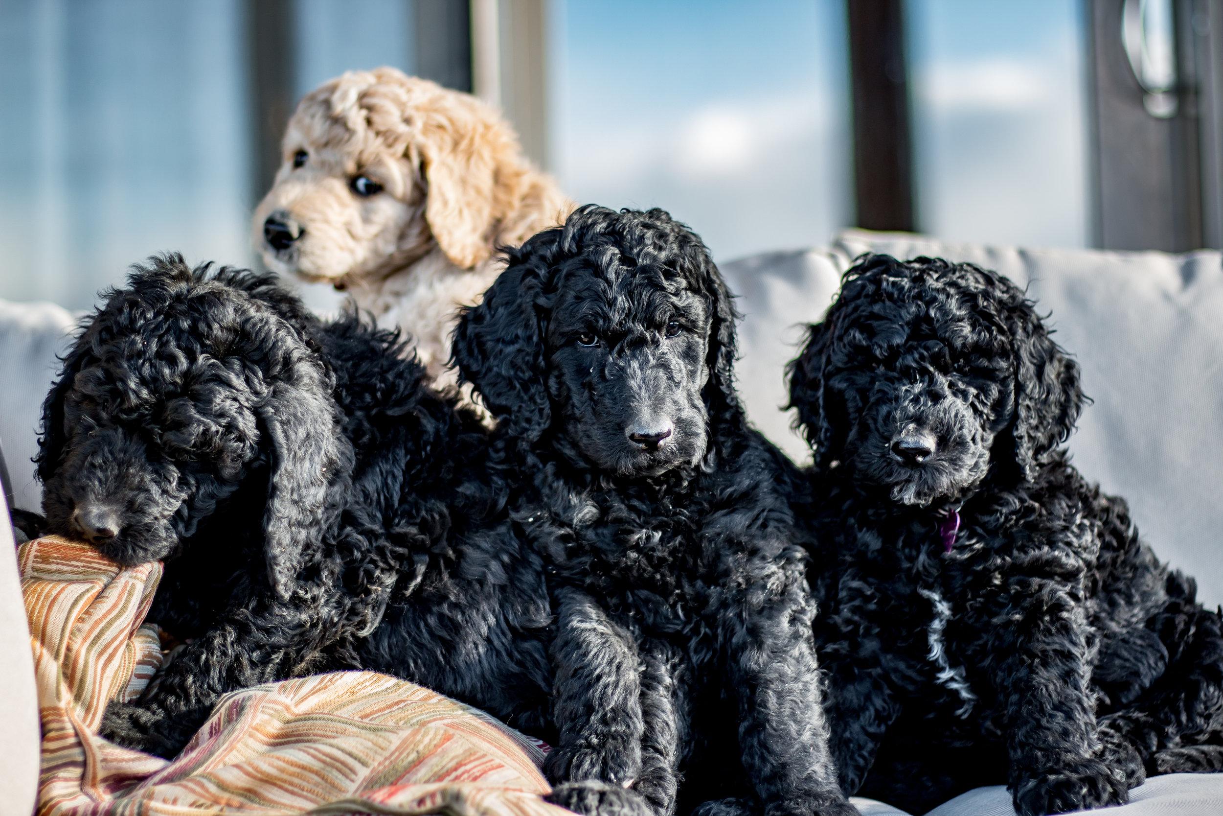 IMG_1219 Puppies.jpg