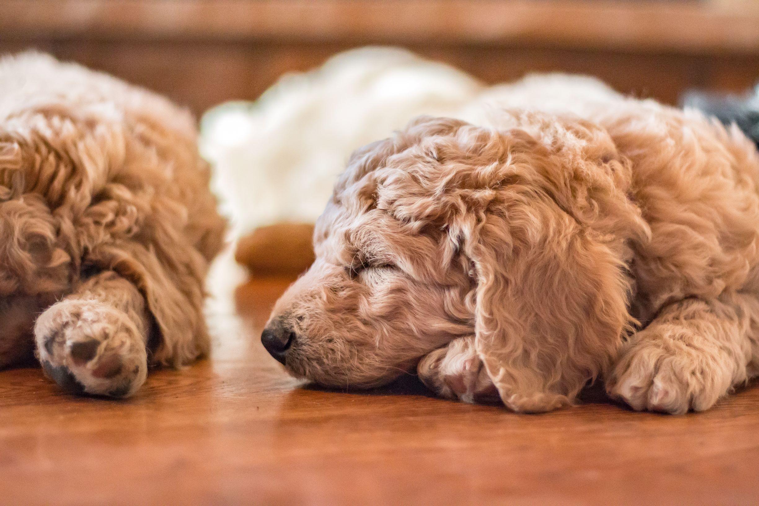IMG_1624 Puppies.jpg