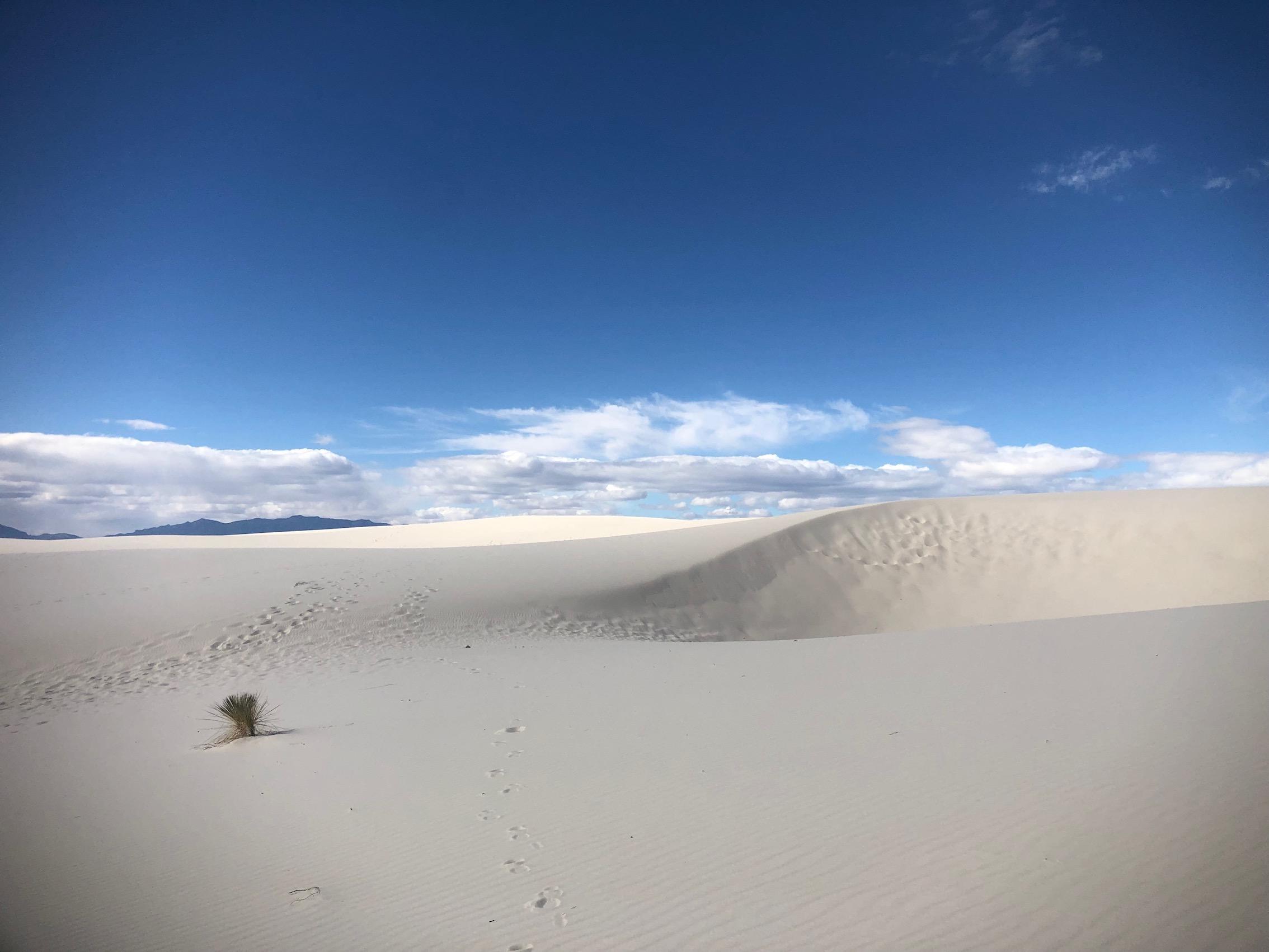 White Sands National Monument, NM, USA. Copyright Nadia Dominique, 2018.