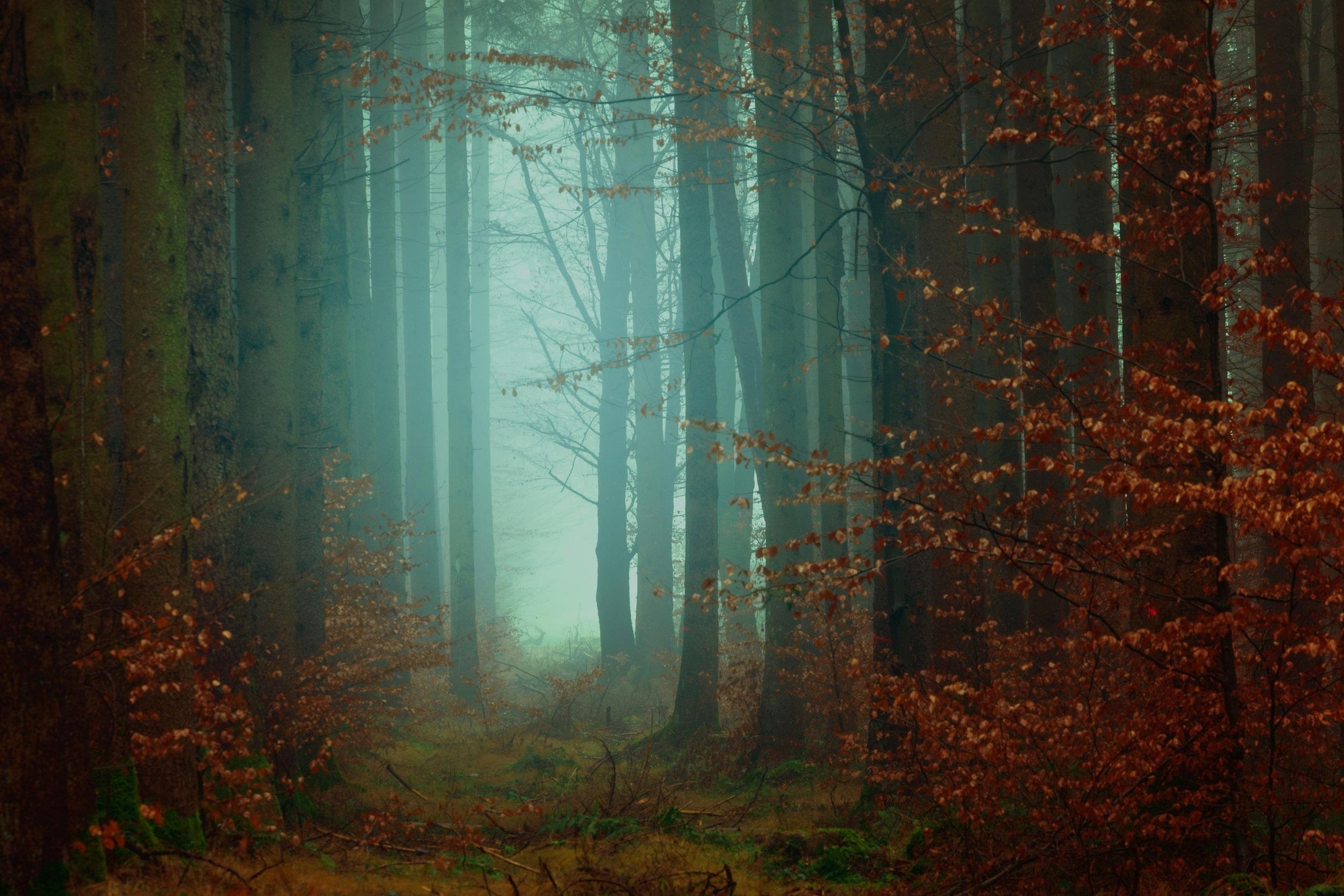 Healing & Enlightenment -
