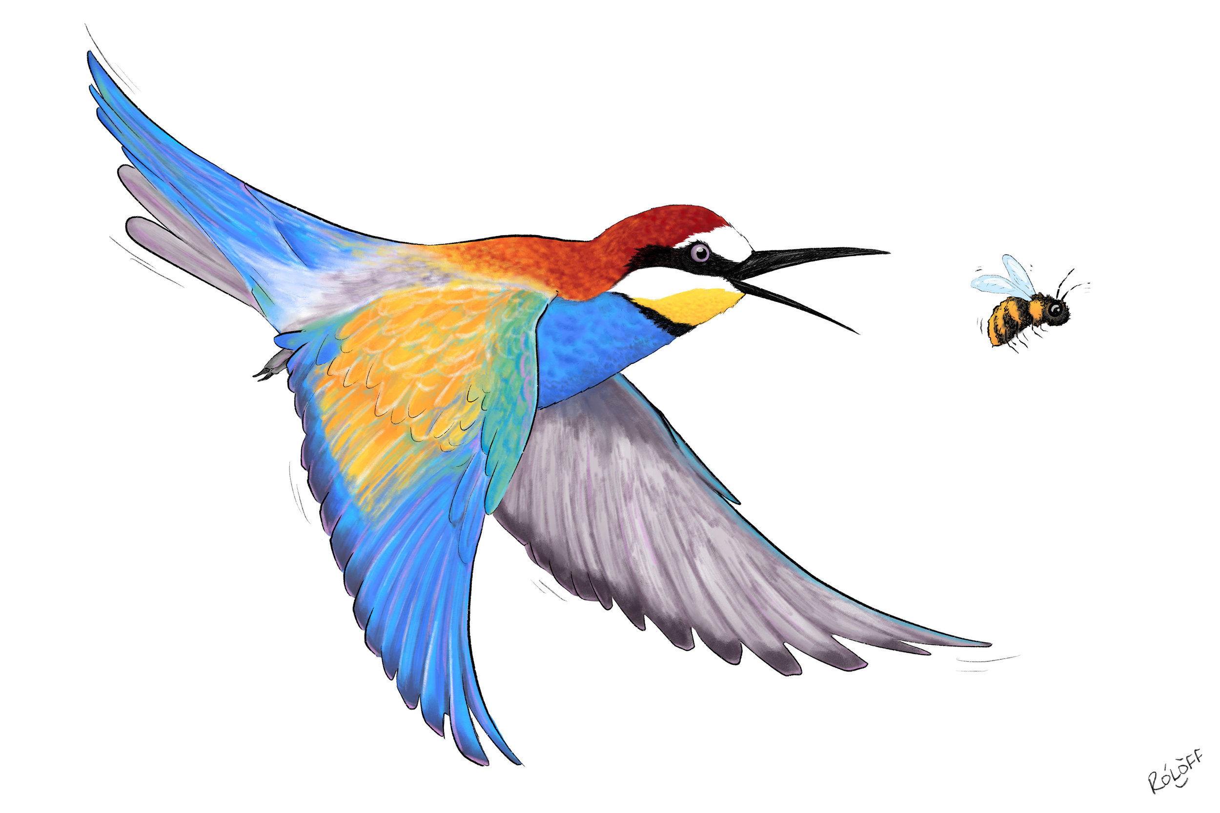 Copy of Bee-eater