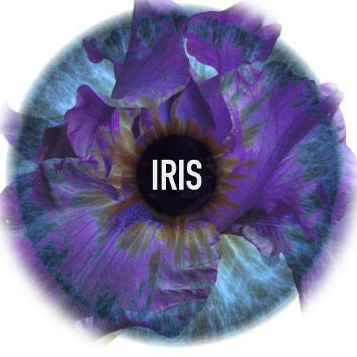 IRISsquare.jpg