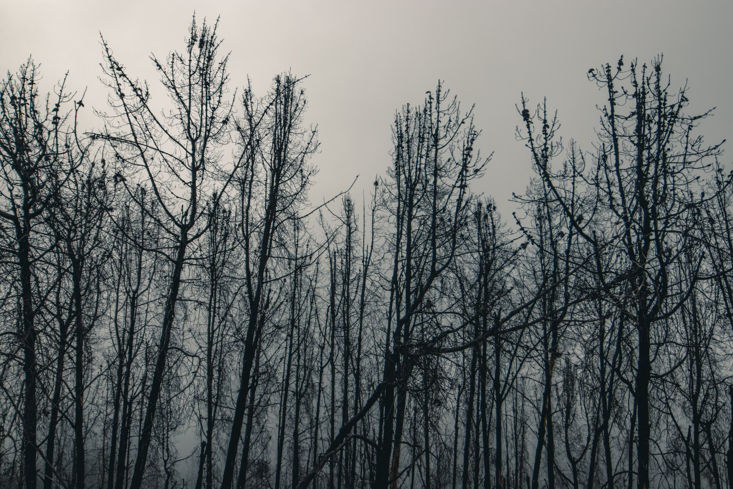 Forest Burned by Wildfire