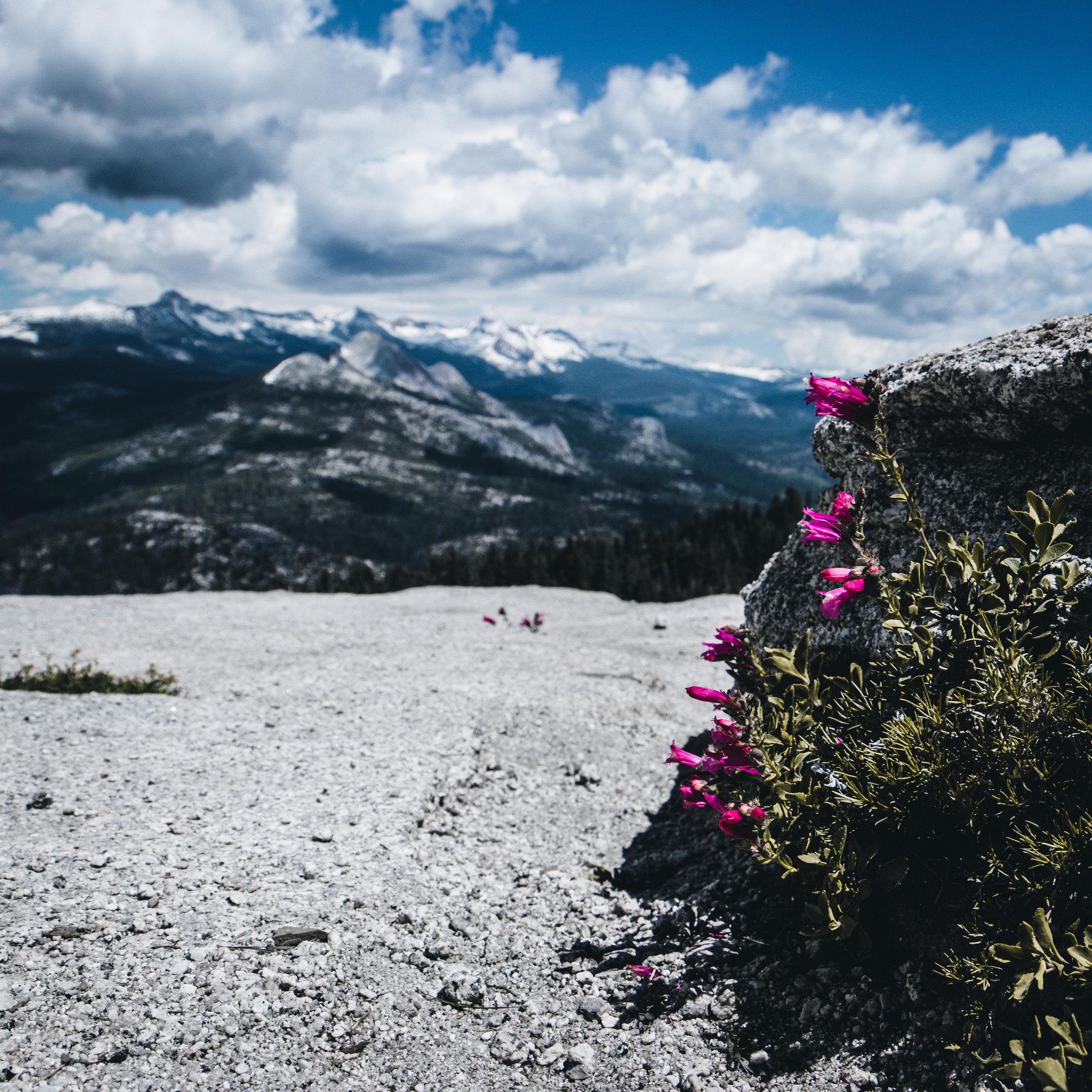 Mountains Yosemite - Herschl 7.jpg