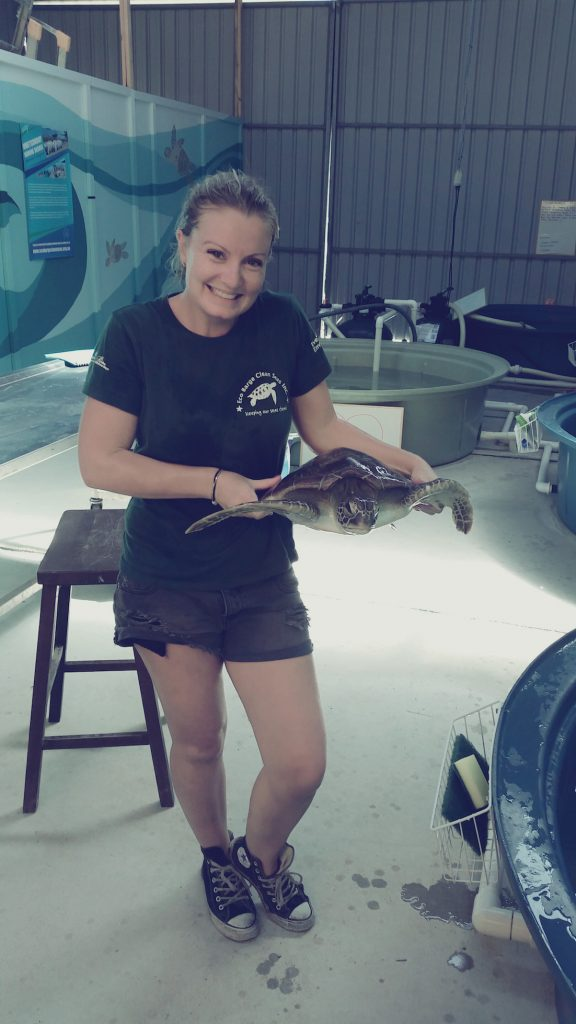 "With ""Jem"", a Green Turtle in our care for float (buoyancy issues due to digestive problems) 2014, WTRS."