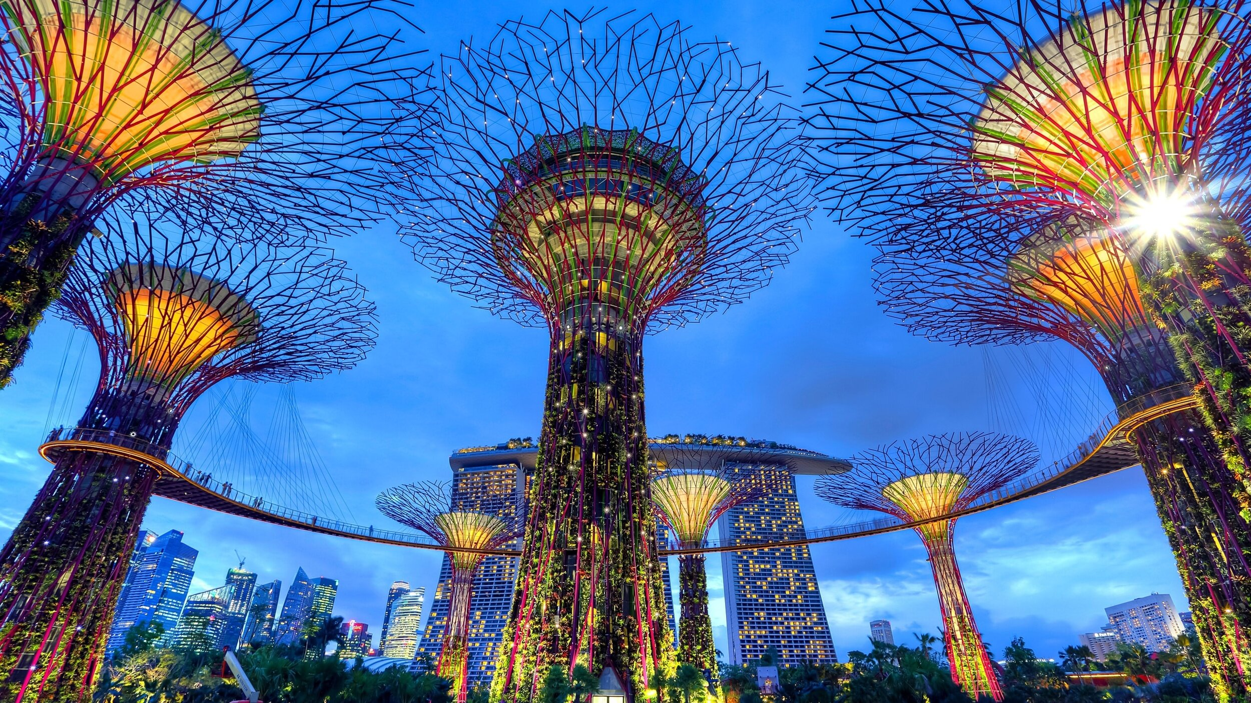 Supertree Grove at Singapore's Gardens by the Bay