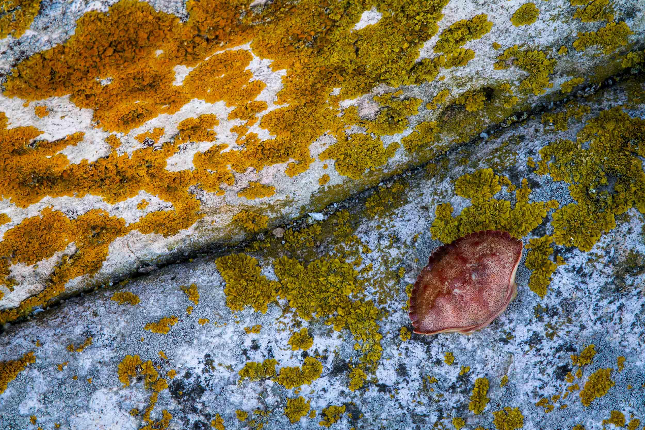 Low Tide, Seawall, Mount Desert Island, ME  8836