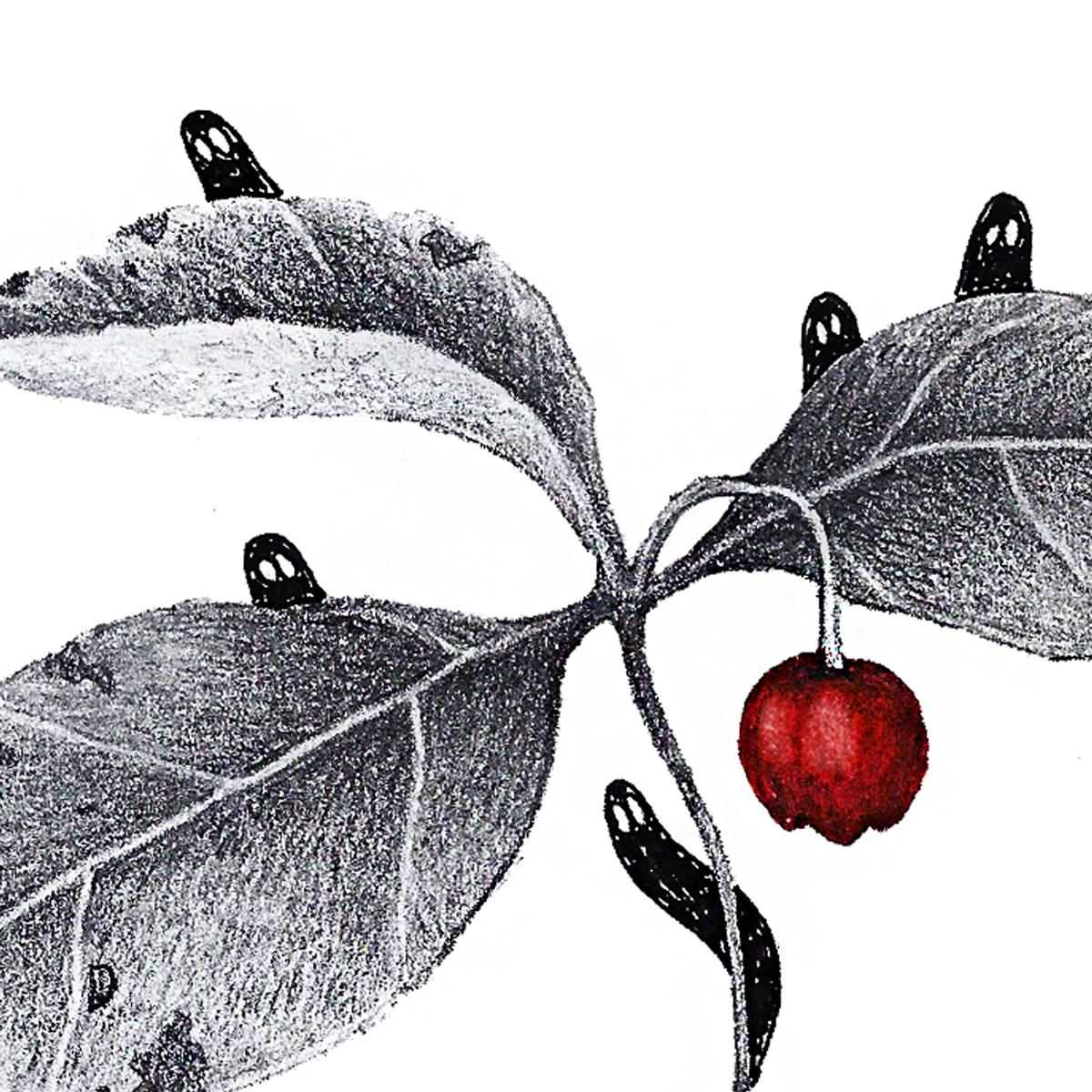 Wintergreen-2.jpg