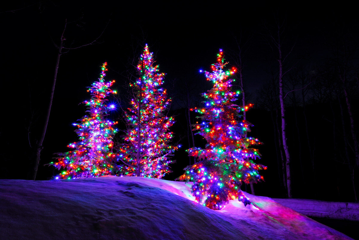 Outdoor Live Christmas Tree.jpg