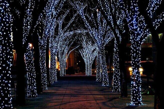 light-tree-hlnw.jpg