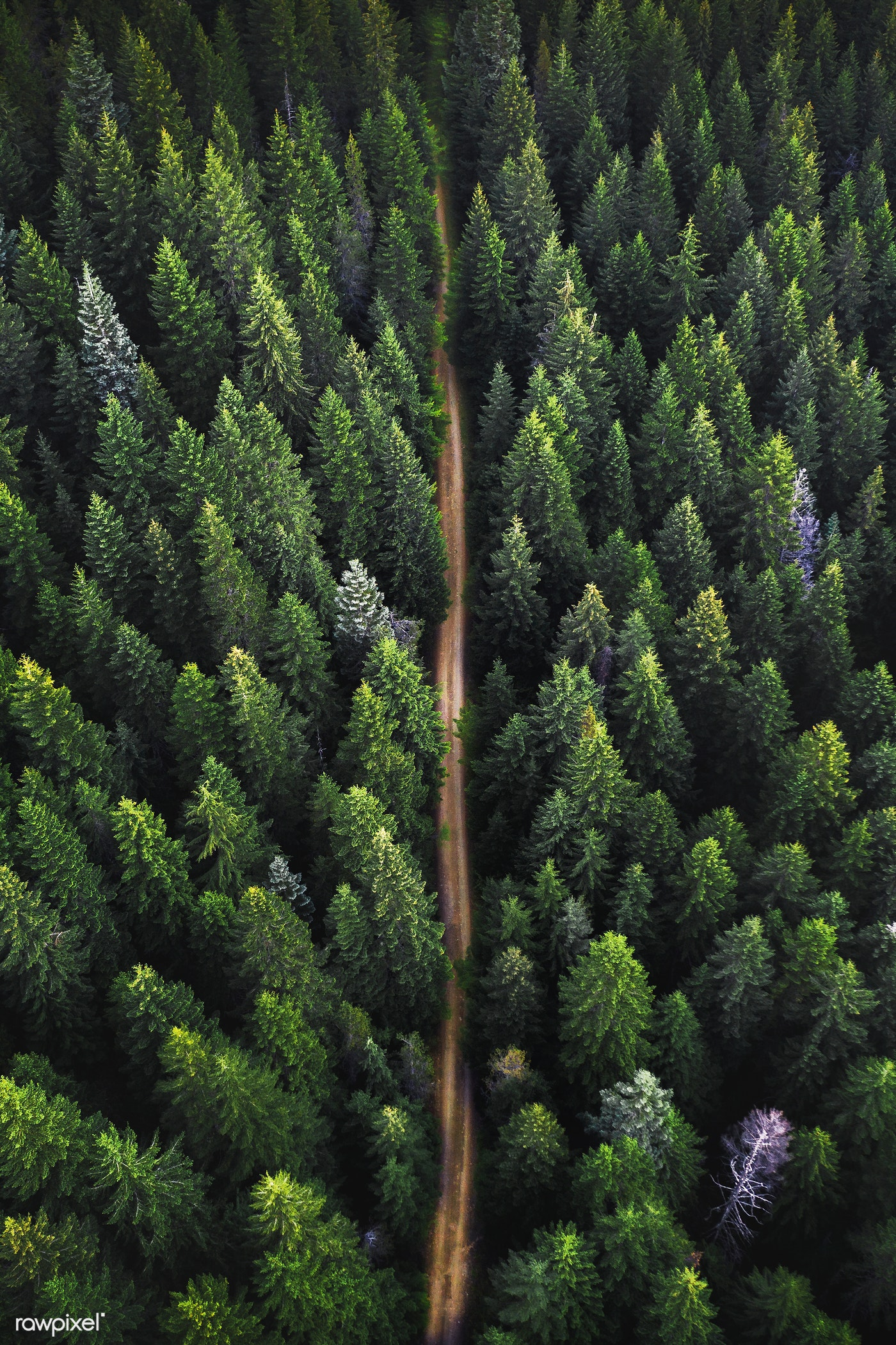 pf-lukestackpoole5-aerial-of-forest-jj-a.jpg