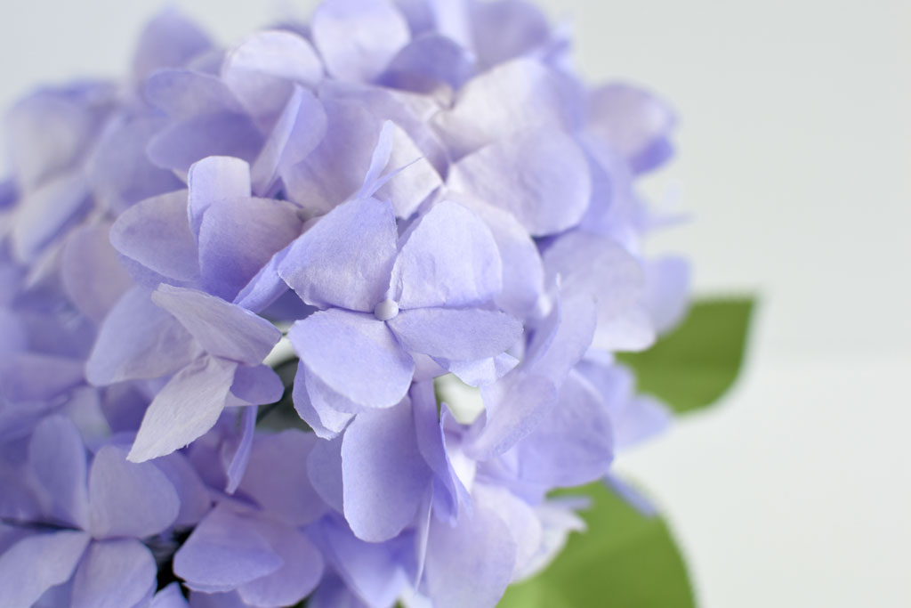 DIY-Paper-Tissue-Hydrangea-Update-glued-centre-tissuepaper-paperflowers-wedding-centrepiece-bridalshower-DIY-Tutorial-homedecor-hydrangea.jpg