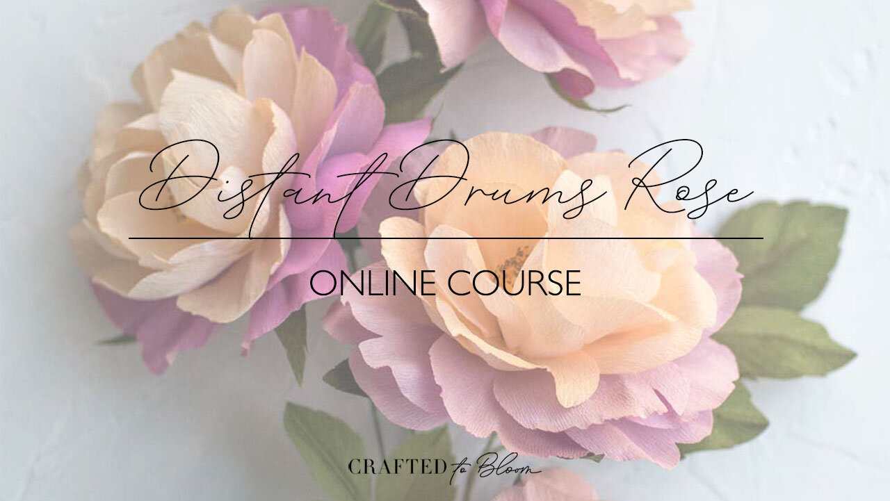 Distant-Drums-Rose---Thumbnail-for-Password-email.jpg