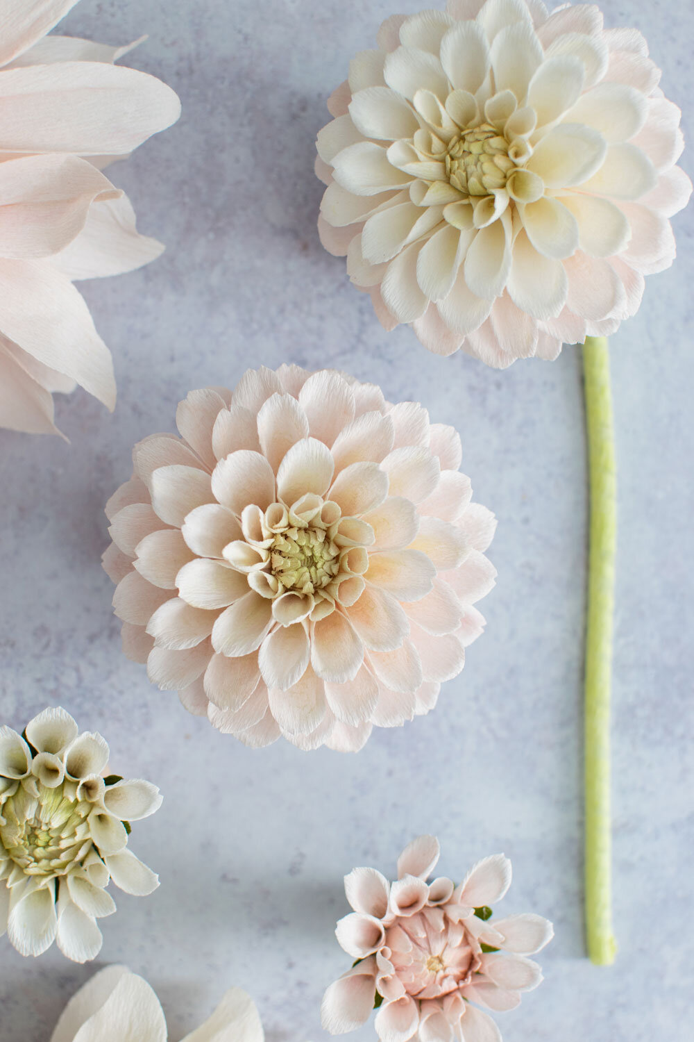Dahlia-Sweet-Nathalie-Course-Thumbnail-for-course---Crafted-to-Bloom.jpg