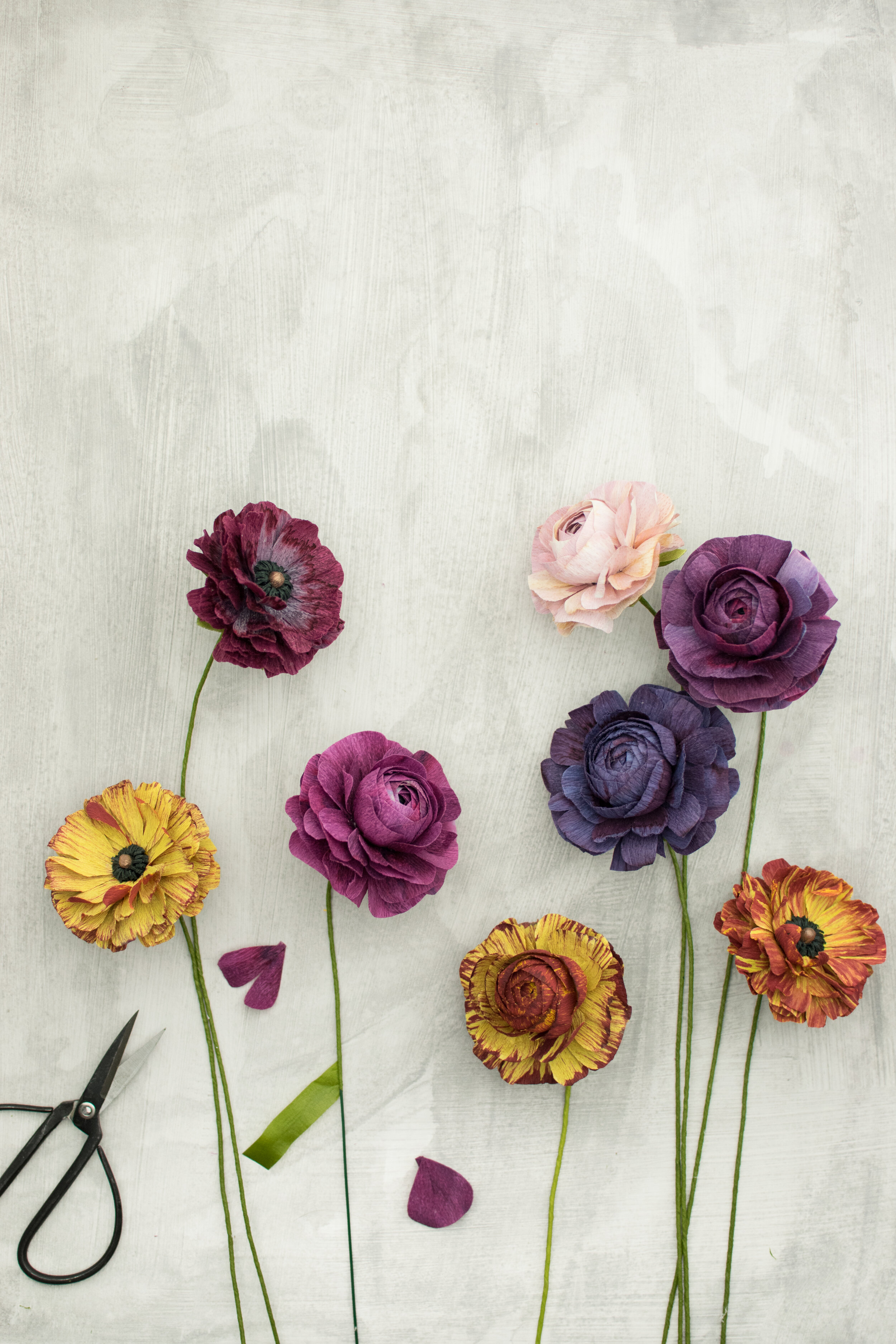 Closed Ranunculus Image 2 V2.jpg