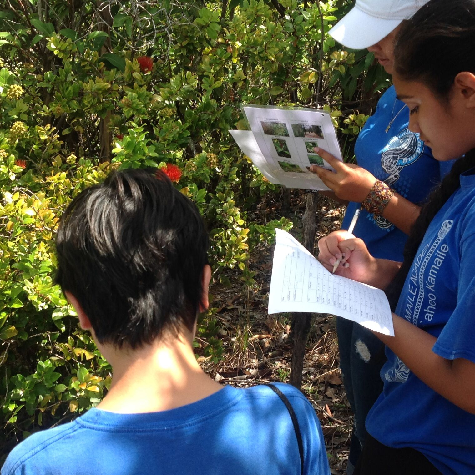 Students from Kamaile Academy study 'ohi'a during a hike through the Ko'olau Mountains, 2016