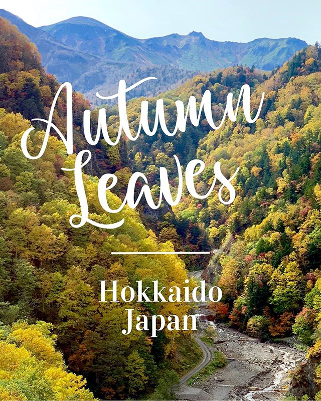 Autumn is coming! You wanna know the best spots for autumn leaves in the Eastern Hokkaido? Check out my latest blog post 🍁💓 . #autumn #autumnleaves #nature #naturephotography #hokkaido #japan #fall #mountains #outdoor #travel #travelling #紅葉 #北海道