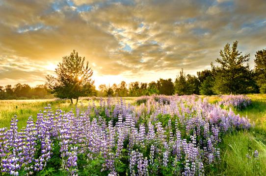 Copyright Tim Giraudier, Beautiful Oregon